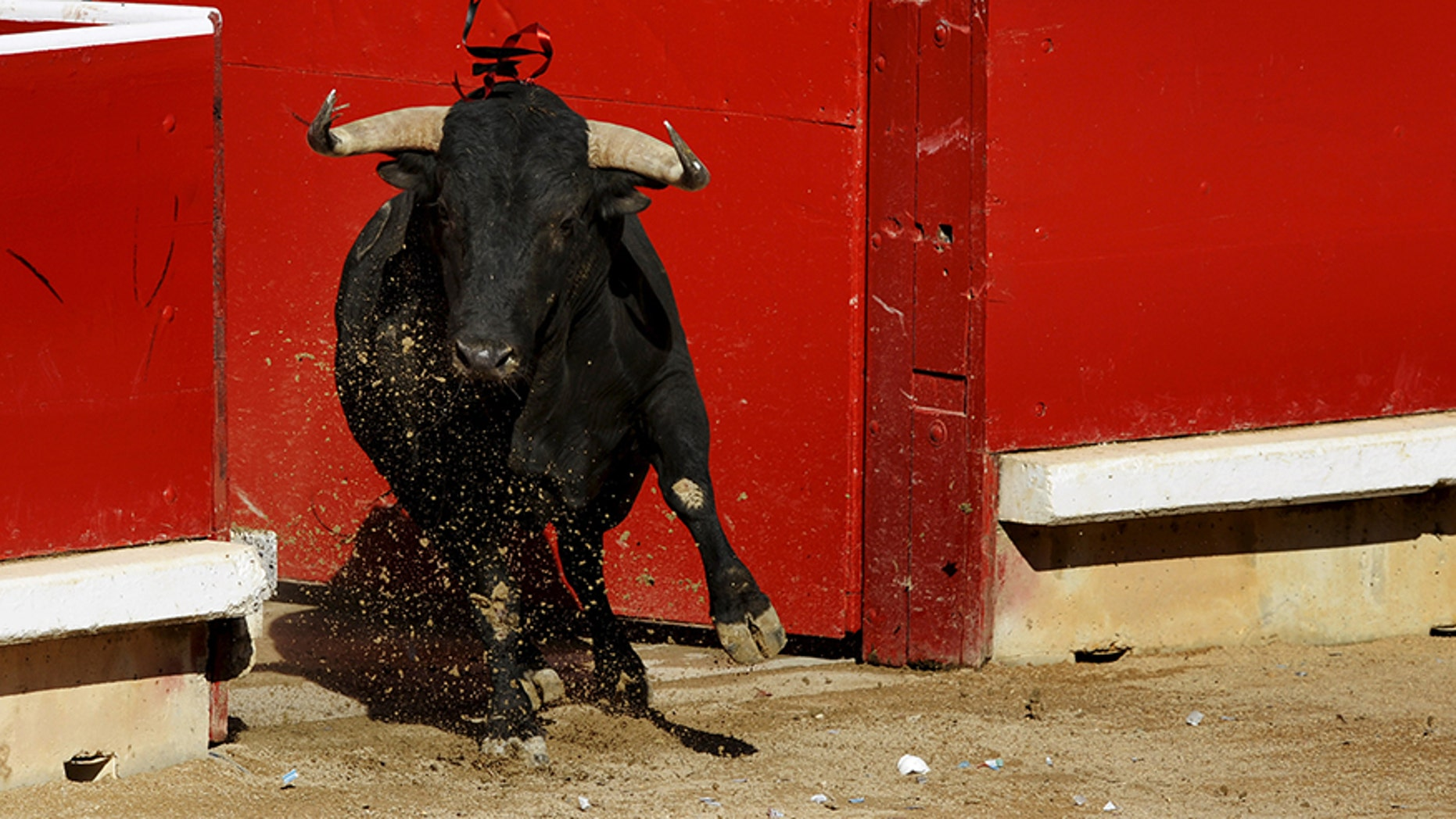 A bull charges into the ring during a bullfight at the San Fermin festival in Pamplona in 2015. This weekend in Mexico, a bullfighter was gored in a scrotum after being caught off guard in the ring.