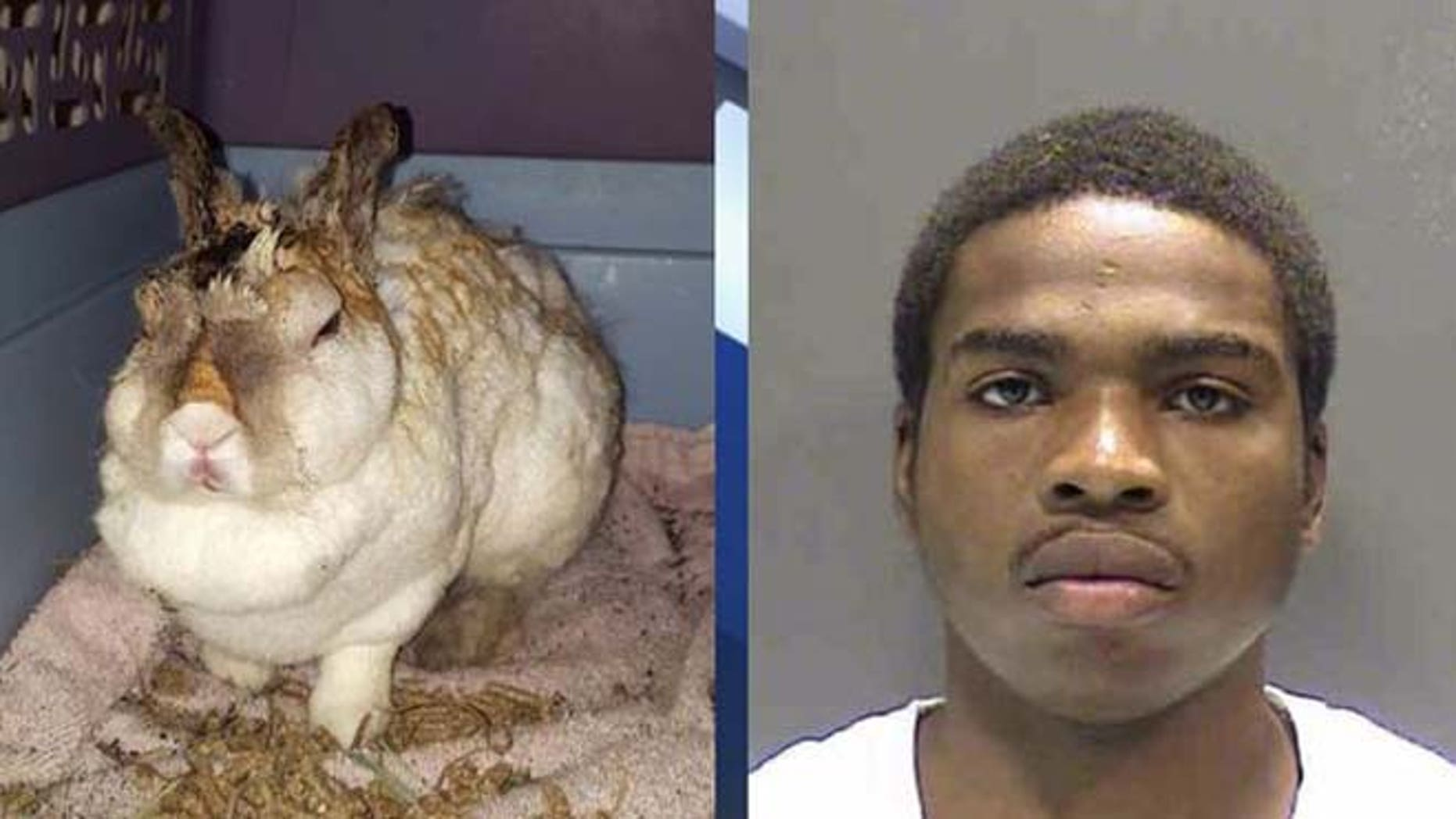 Manasseh Walker, 22, was arrested Thursday on charges of burning a domestic rabbit named Thumper. (Sarasota County Sheriff's Office/Fox 4)