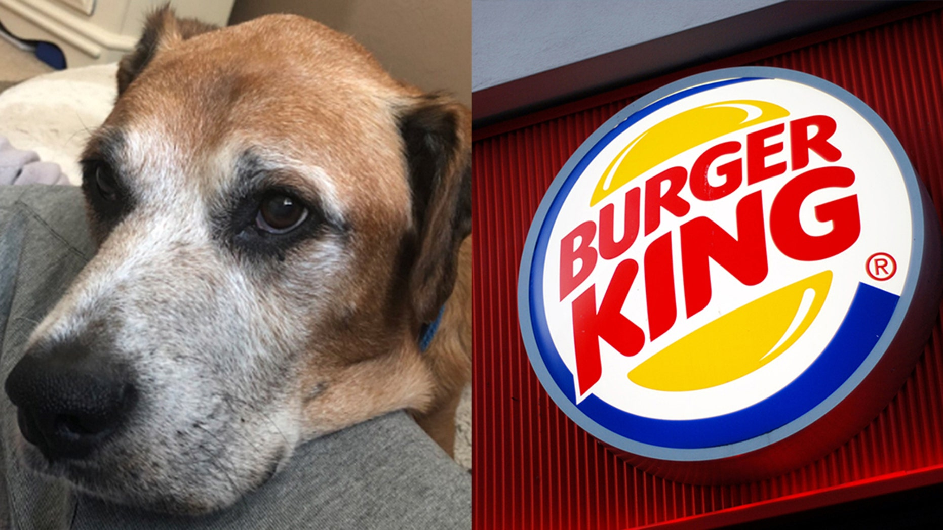 A Burger King in Toledo, Ohio is giving terminally ill Cody free cheeseburgers to help keep him happy in his final days.