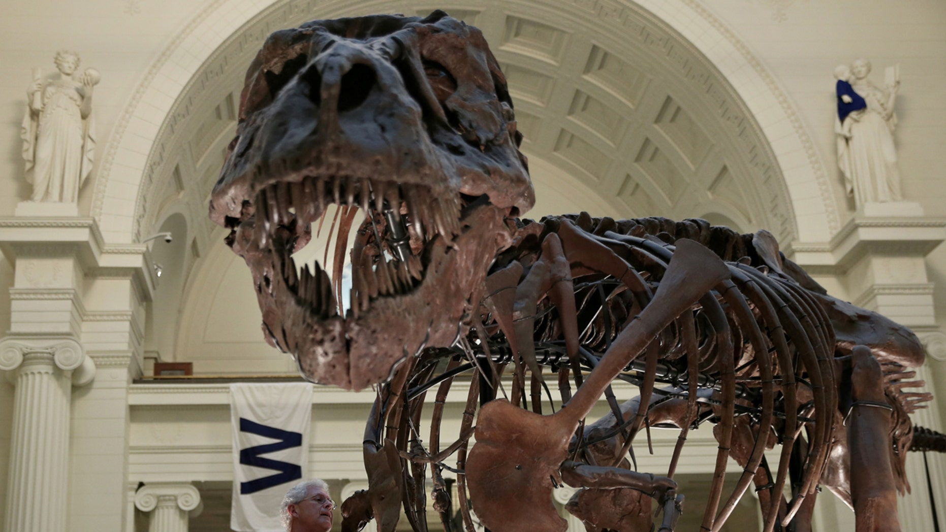 """A fossil of a Tyrannosaurus rex known as """"Sue"""" is seen in Chicago's Field Museum, Oct. 6, 2016."""
