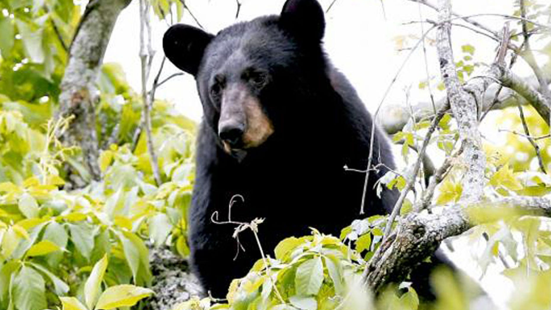 Patrick Cooper encountered the black bear that would take his life in a rare predatory attack.