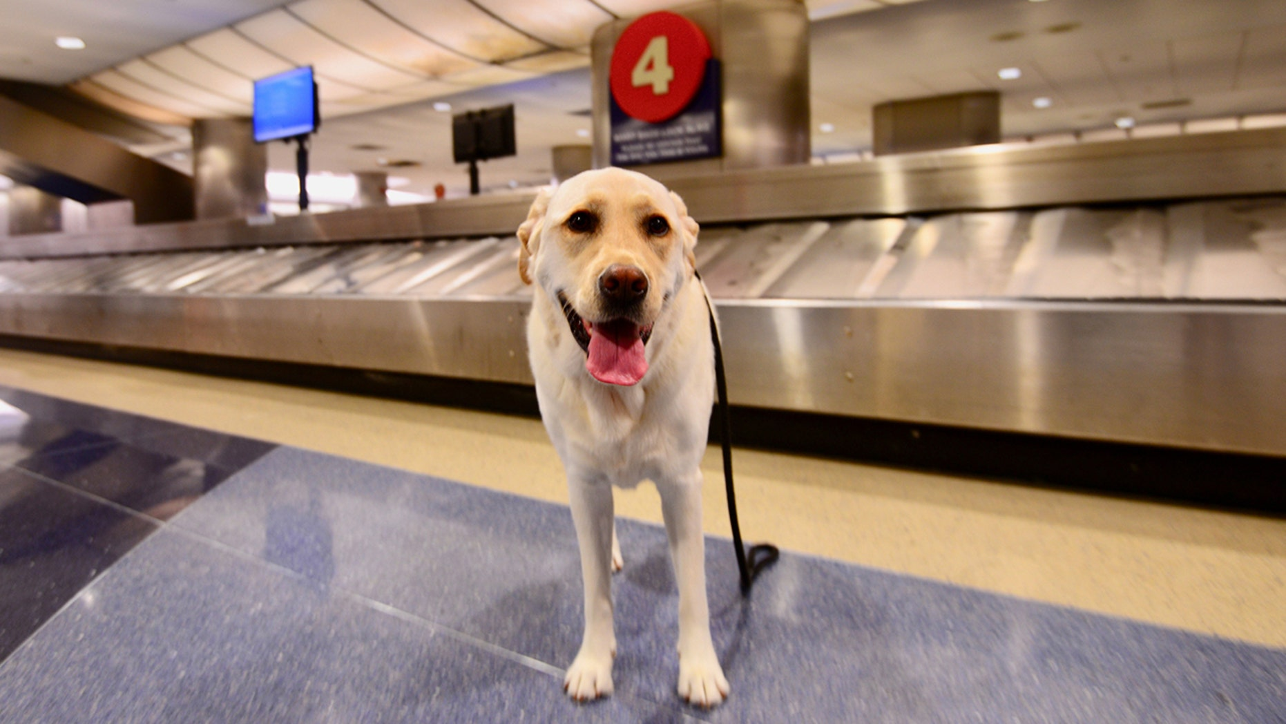 The dog apparently preferred to explore Fort Lauderdale-Hollywood International Airport on his own.