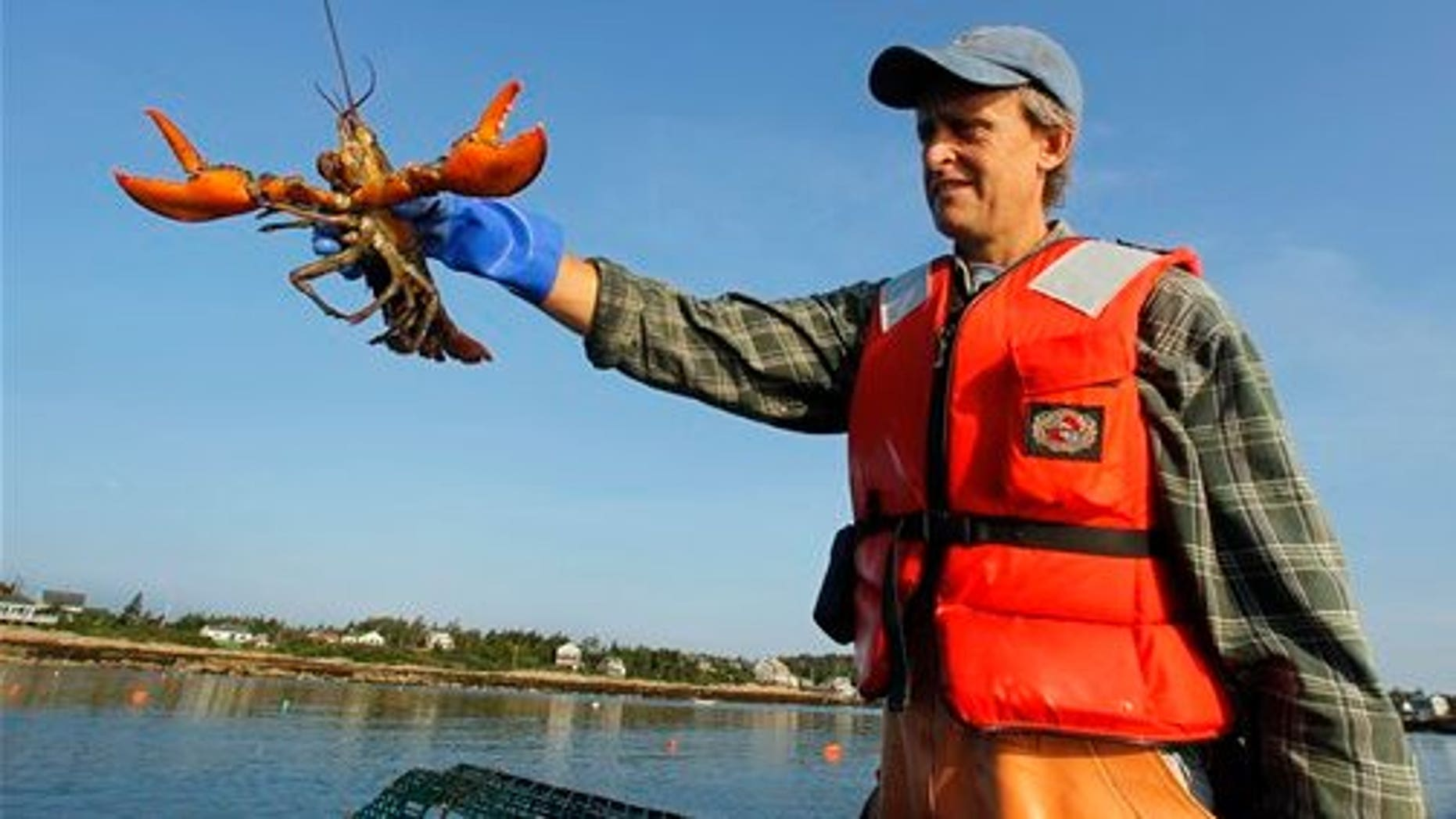 July 28: Lobsterman Nat Hussey holds a lobster caught off Matinicus Island, Maine. (AP)