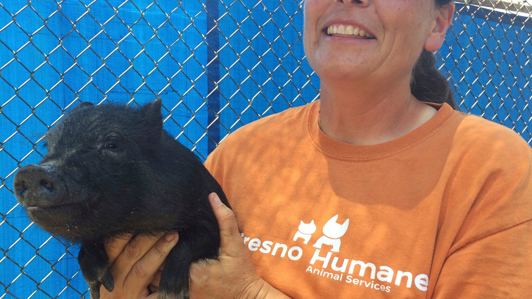 In this Monday, June 19, 2017 photo Tracy Crutchfield, Fresno Humane Animal Services shelter manager, holds one of three pigs found in a trailer that registered 107 degrees Fahrenheit the county found Friday, June 16 in Fresno, Calif.