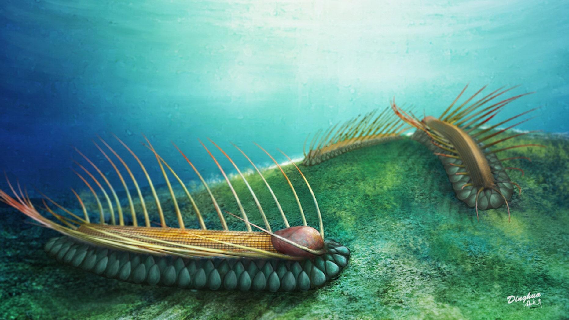 An artist's interpretation of the spiky <i>Orthrozanclus elongata</i>