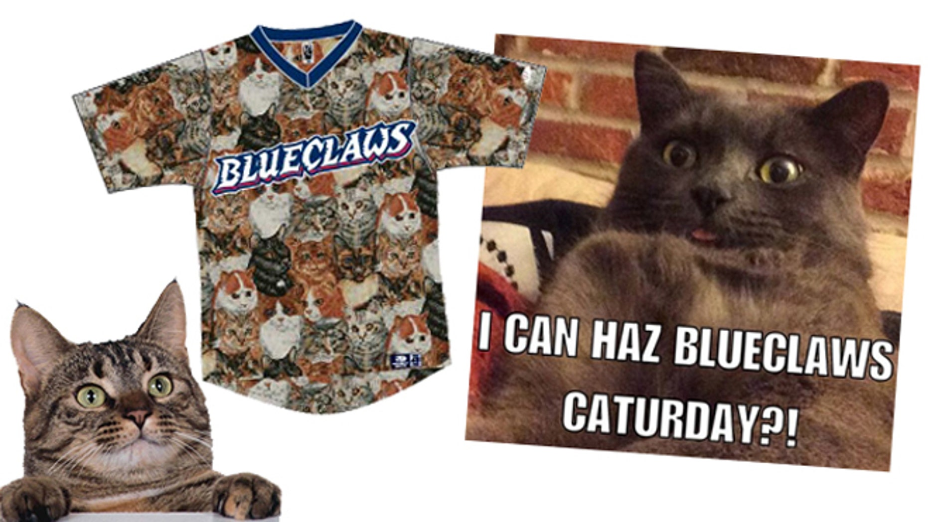 Saturday at FirstEnergy Park in Lakewood, N.J. is CATurday, expected to be a Purrfect night for cats at the ballpark. (Lakewood BlueClaws)