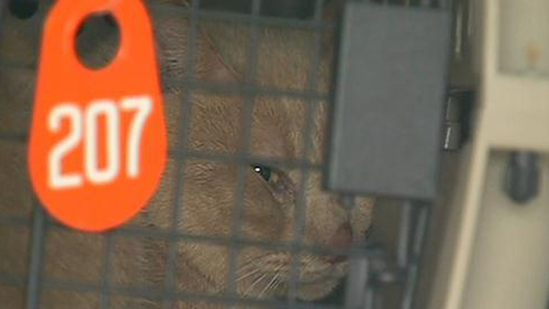 Cats rescued from a Houston home covered in animal waste have been taken to an SPCA shelter.