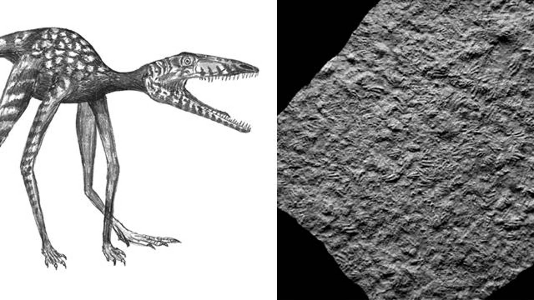 Researchers discovered numerous footprints of the dinosaur Prorotodactylus from the Early Triassic (250 million years ago) of Poland, and now considered the oldest dino prints.