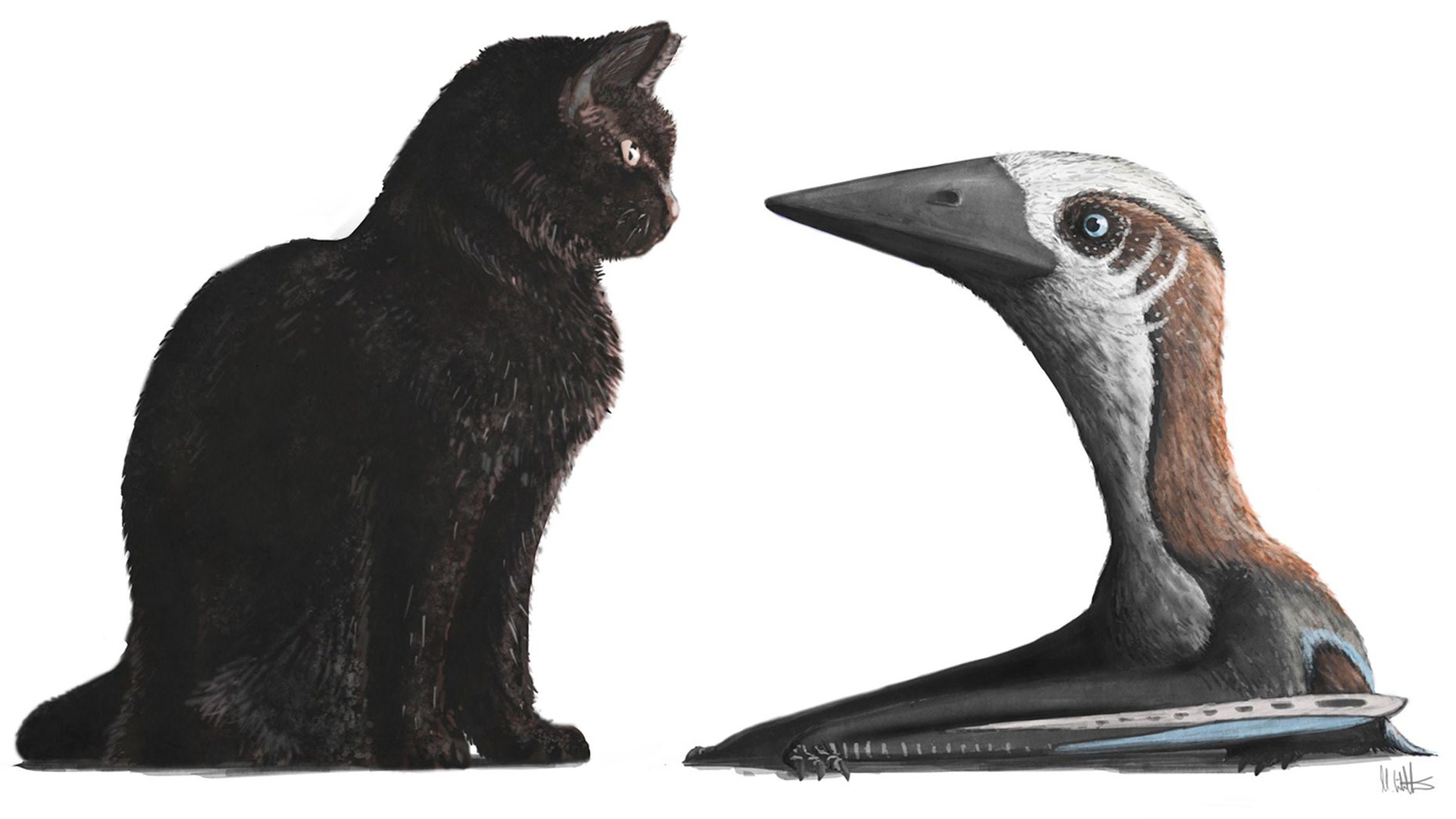 A newly discovered and unusually puny pterosaur would see eye to eye with a modern house cat.