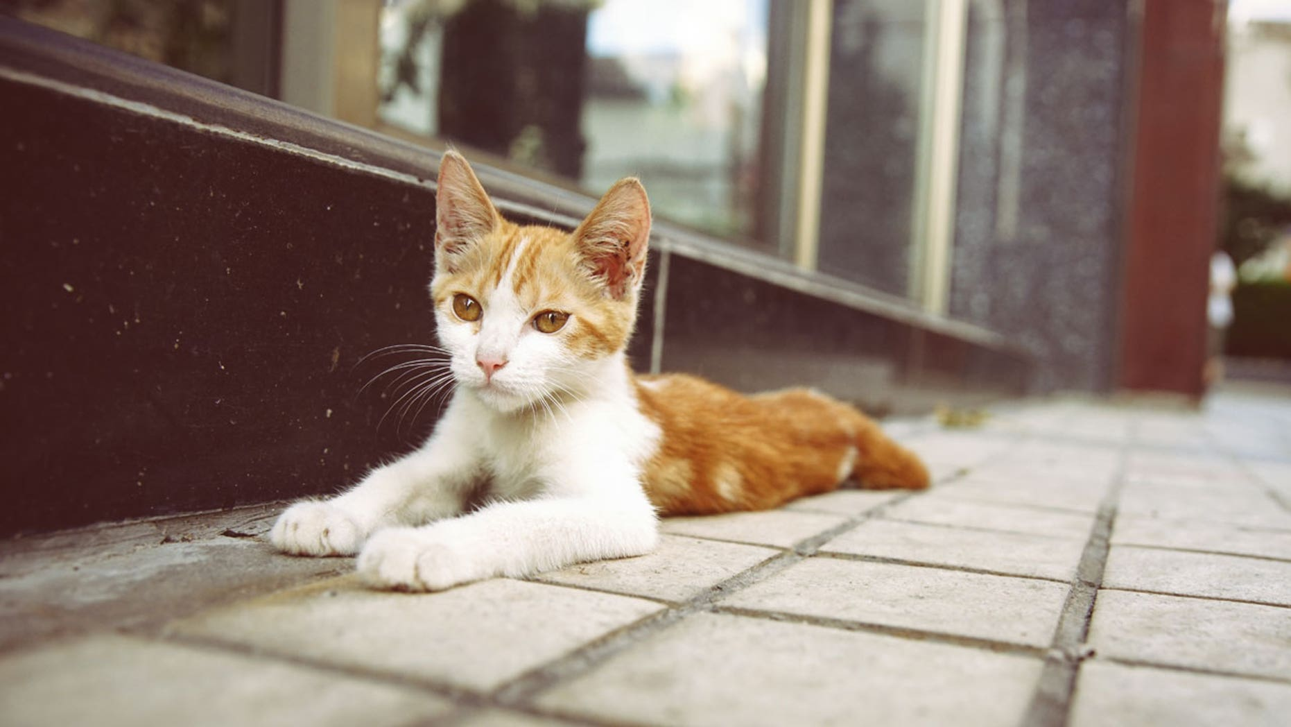 A man in China rounded up hundreds of stray and domesticated cats to sell to restaurants.