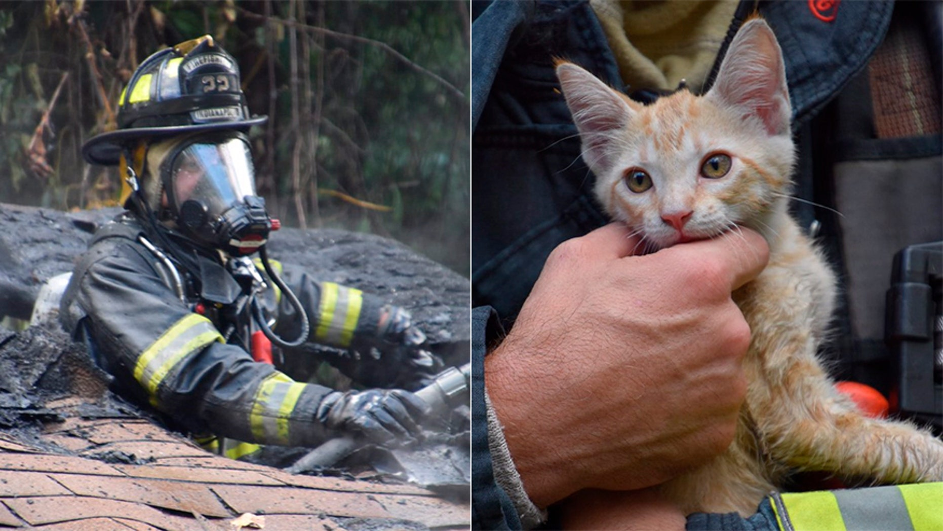 A firefighter saved this kitten from a house fire in Indianapolis.
