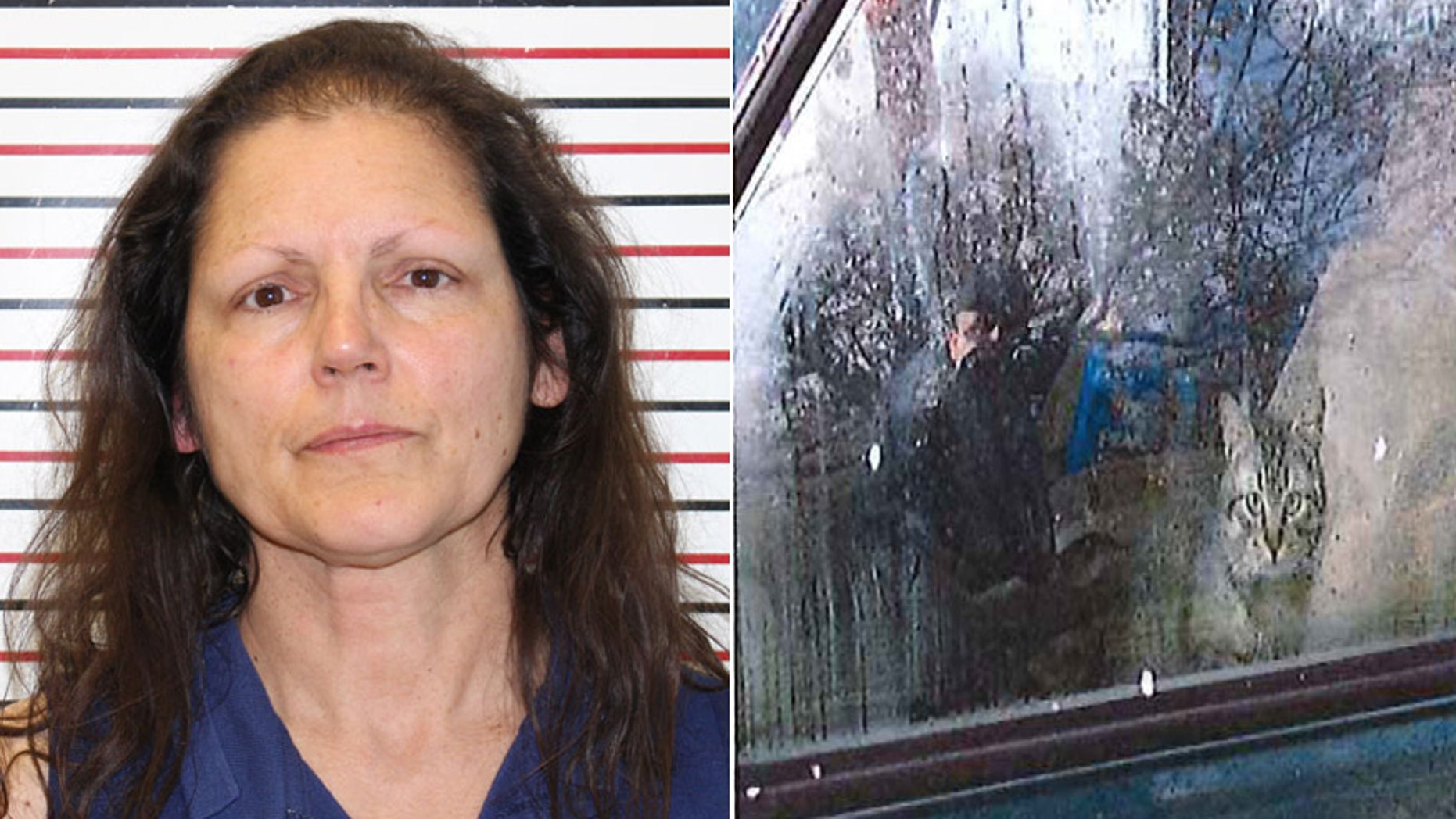 Police say 42 cats were found in Kathryn St. Clare's car Monday when she was arrested in Warrenton, Wash.