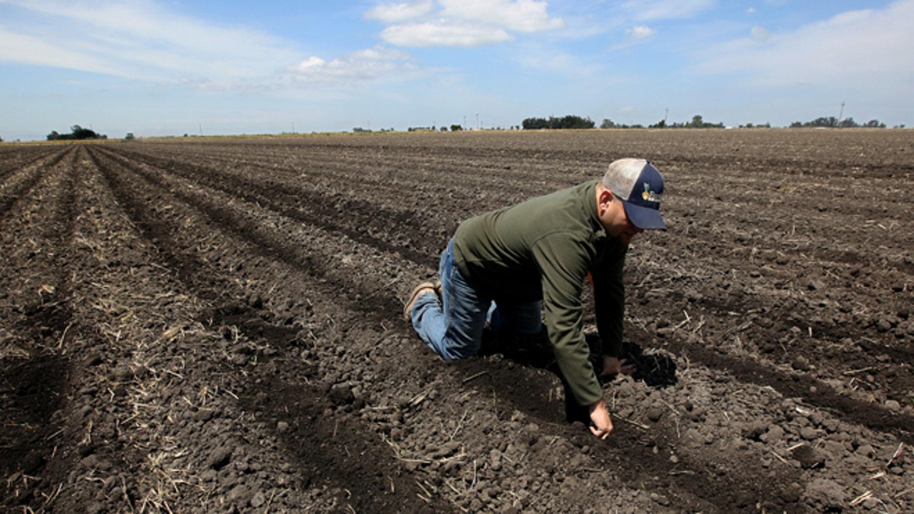 In this photo taken Monday, May 18, 2015, Gino Celli checks the moisture of land just planted with corn seed on land he farms near Stockton, Calif. Celli farms 1,500 acres of land and manages another 7,000 acres, has senior water rights and draws his irrigation water from the Sacramento-San Joaquin River Delta. Farmers in the Sacramento-San Joaquin River Delta who have California's oldest water rights are proposing to voluntarily cut their use by 25 percent to avoid the possibility of even harsher restrictions by the state later this summer as the record drought continues. (AP Photo/Rich Pedroncelli)
