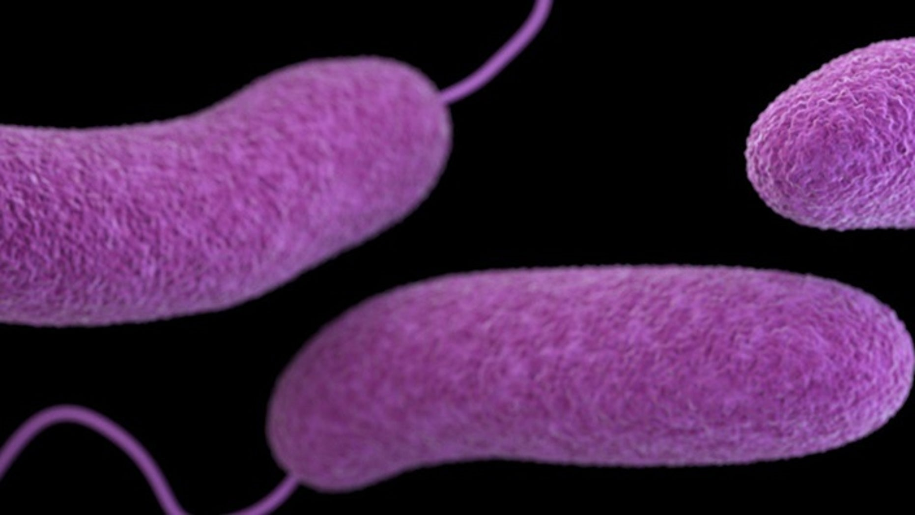A Florida resident in Escambia County has contracted vibrio vulnificus, the second known case of the infection in the county this year.