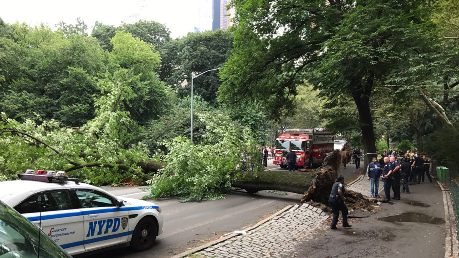 The scene after a massive tree fell in New York's Central Park, injuring a woman and three children.