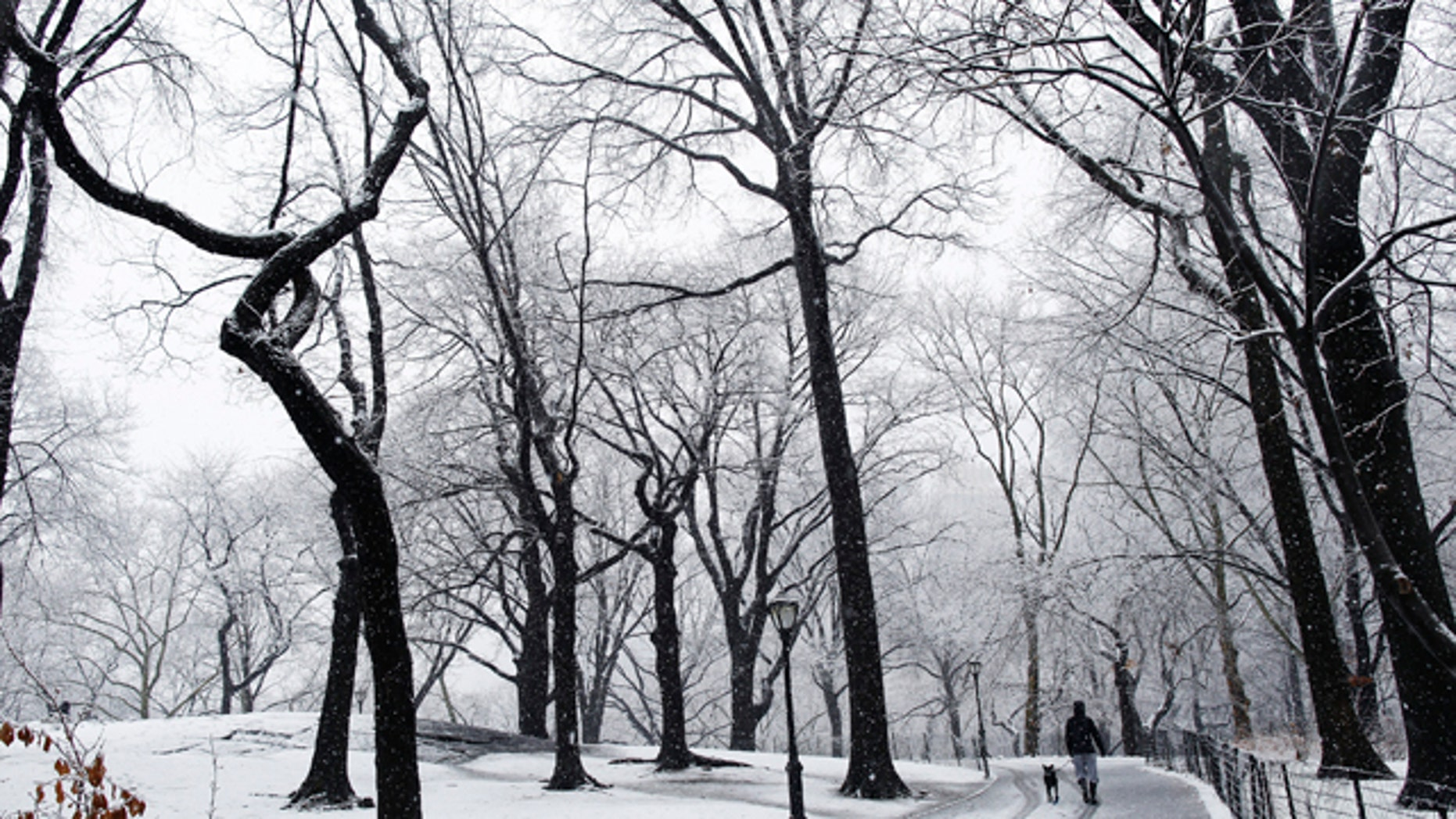 A woman walks her dog during snowfall in the morning at Central Park in New York February 25, 2010.  REUTERS/Shannon Stapleton (UNITED STATES - Tags: SOCIETY ENVIRONMENT)