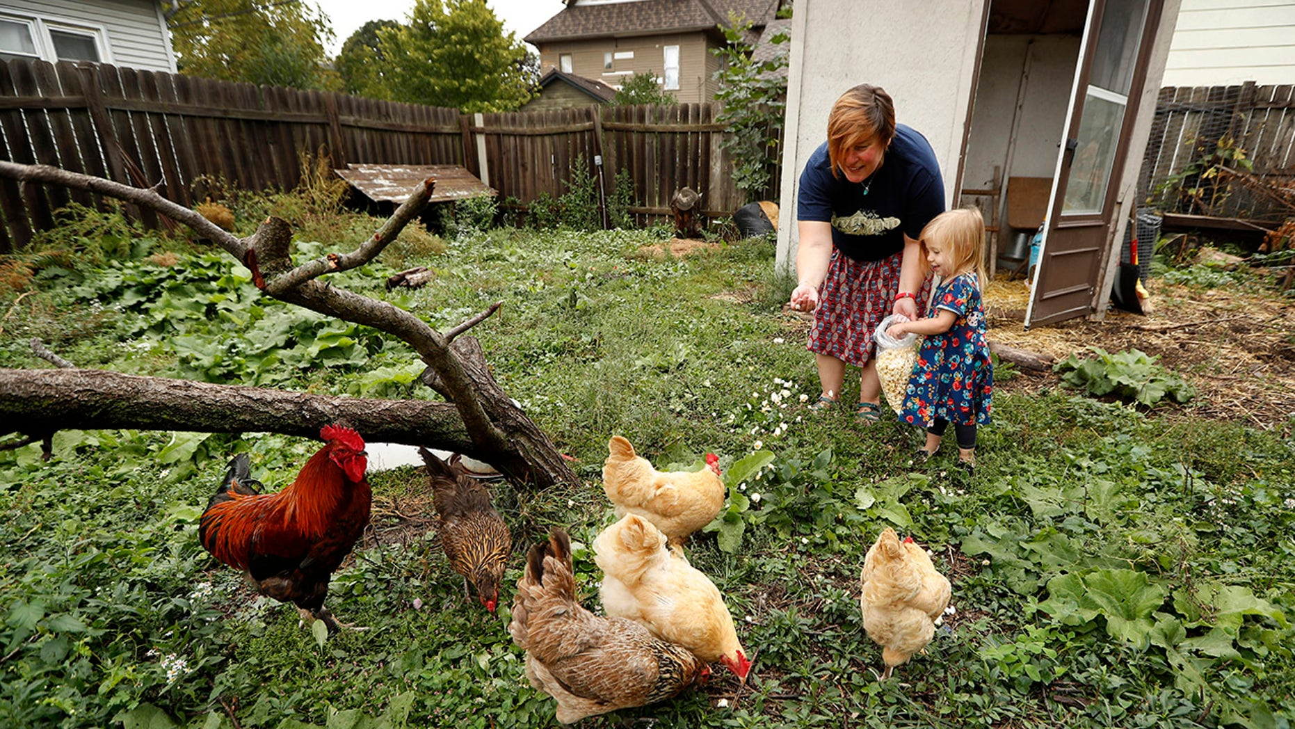 Sept. 26, 2017: In this photo, Tanya Keith of Des Moines, Iowa, and her daughter Iolana feed their chickens in the backyard of their home.