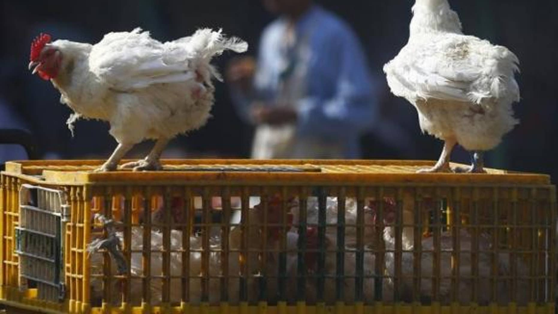 Dec. 4, 2014: A man walks past live chickens on the outskirts of Cairo.