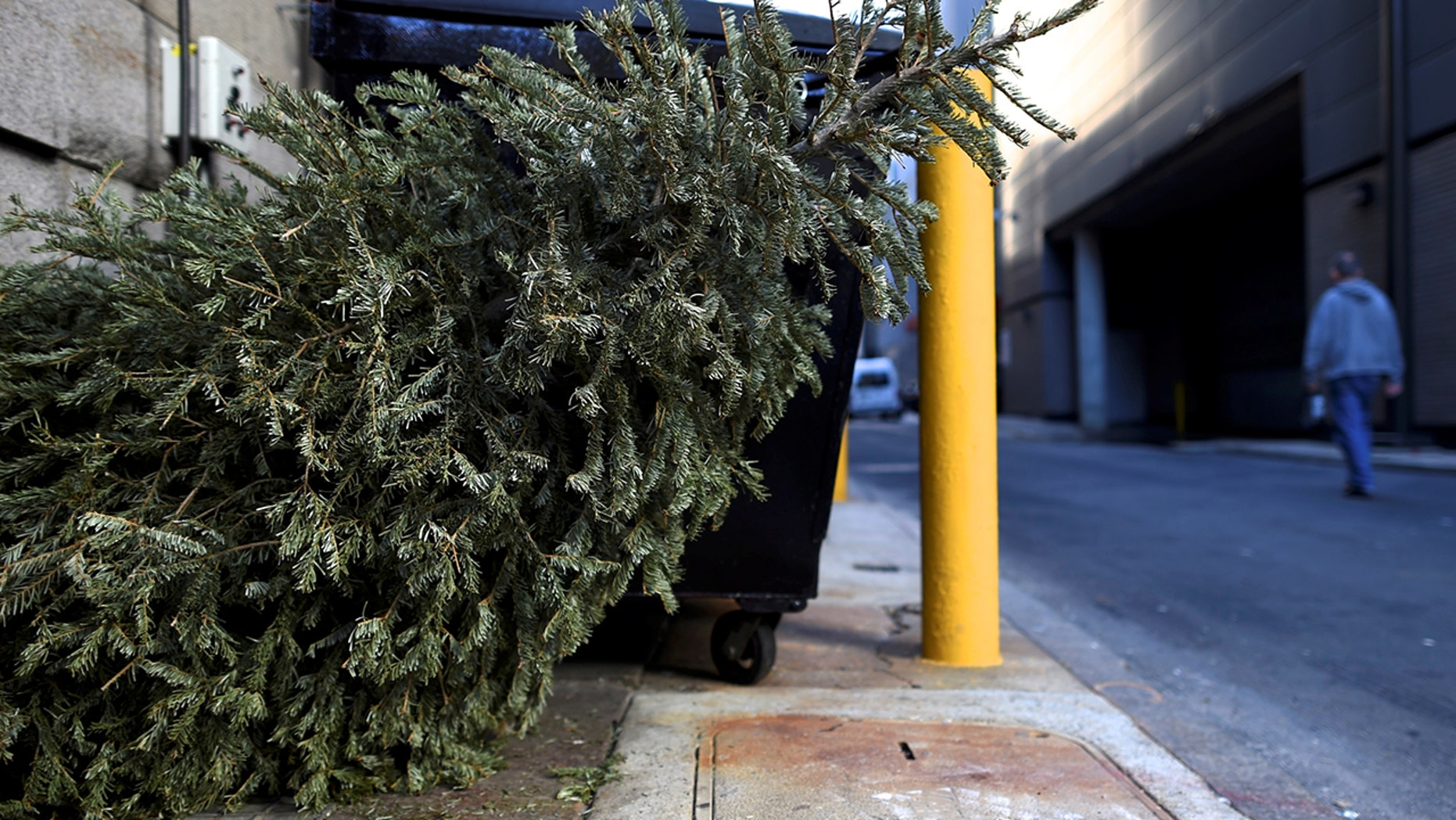 got a dead christmas tree a california woman tried bringing it back for a refund