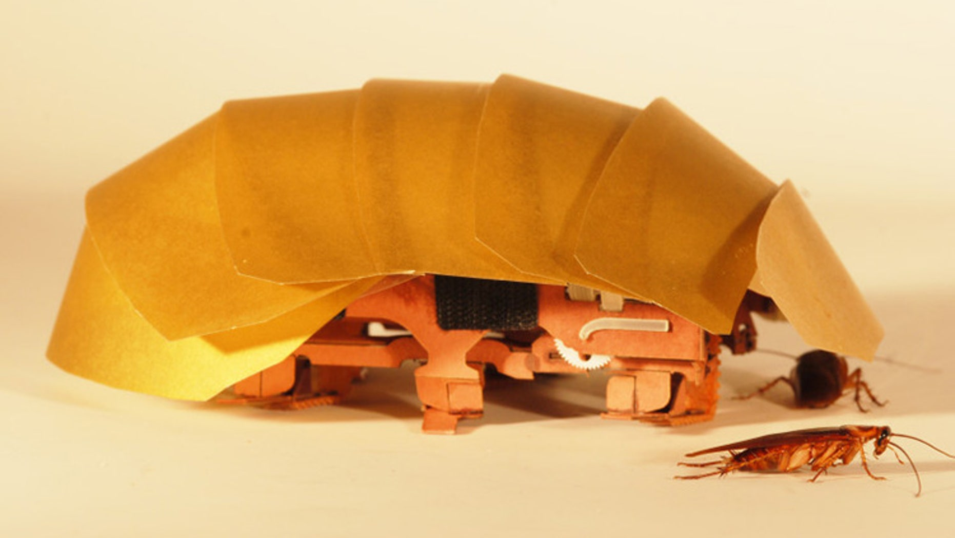 The CRAM robot was inspired by cockroaches and can crawl even when squashed to half its size. (Photo by Tom Libby, Kaushik Jayaram and Pauline Jennings. Courtesy of PolyPEDAL Lab, UC Berkeley)