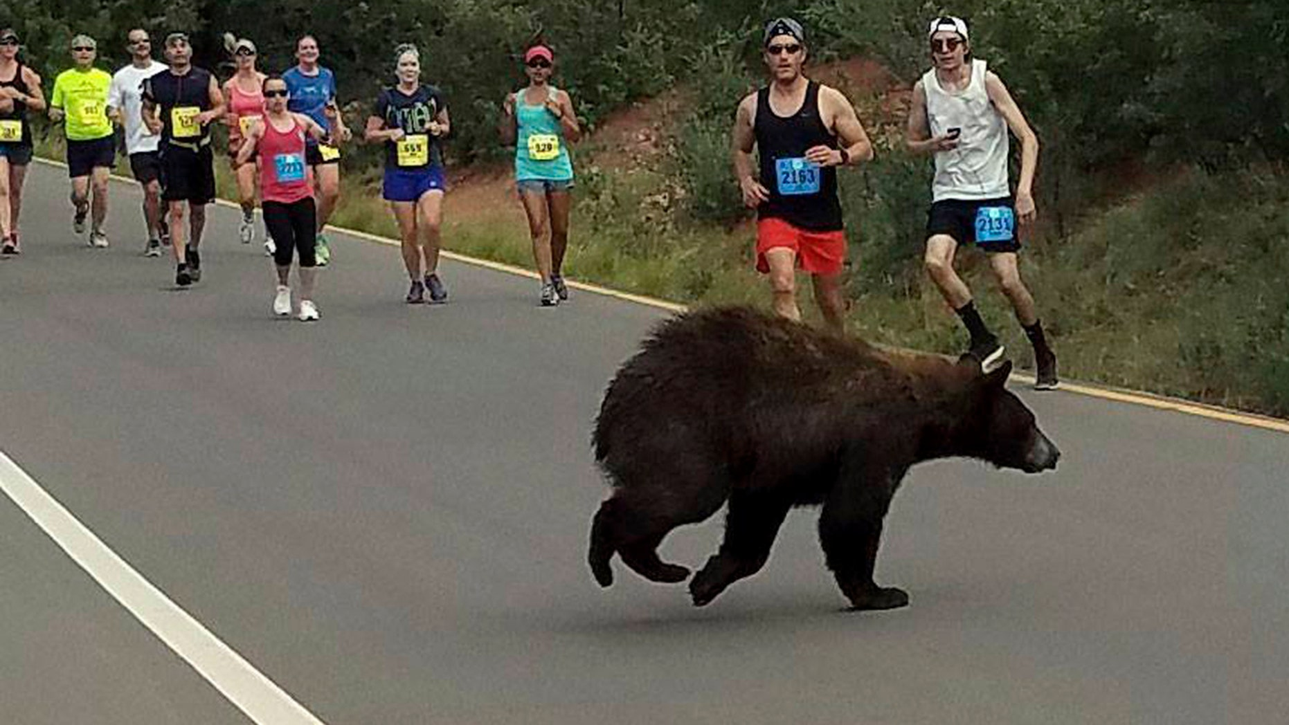 In this photo provided by Donald Sanborn, a bear walks across the street as runners compete in the Garden of the Gods 10 Mile Run near Colorado Springs, Colo., Sunday, June 11, 2017.