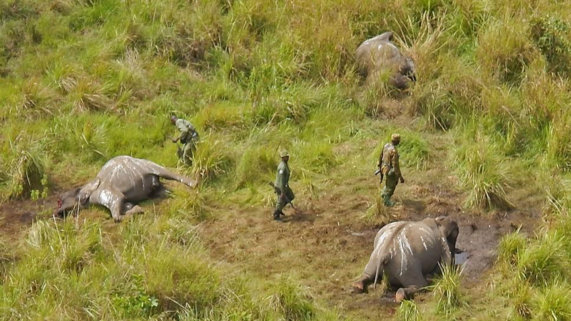 Park rangers stand near the remains of three elephants that were killed by unknown poachers in the Garamba National Park, located in the Democratic Republic of Congo. (AP Photo/African Parks)