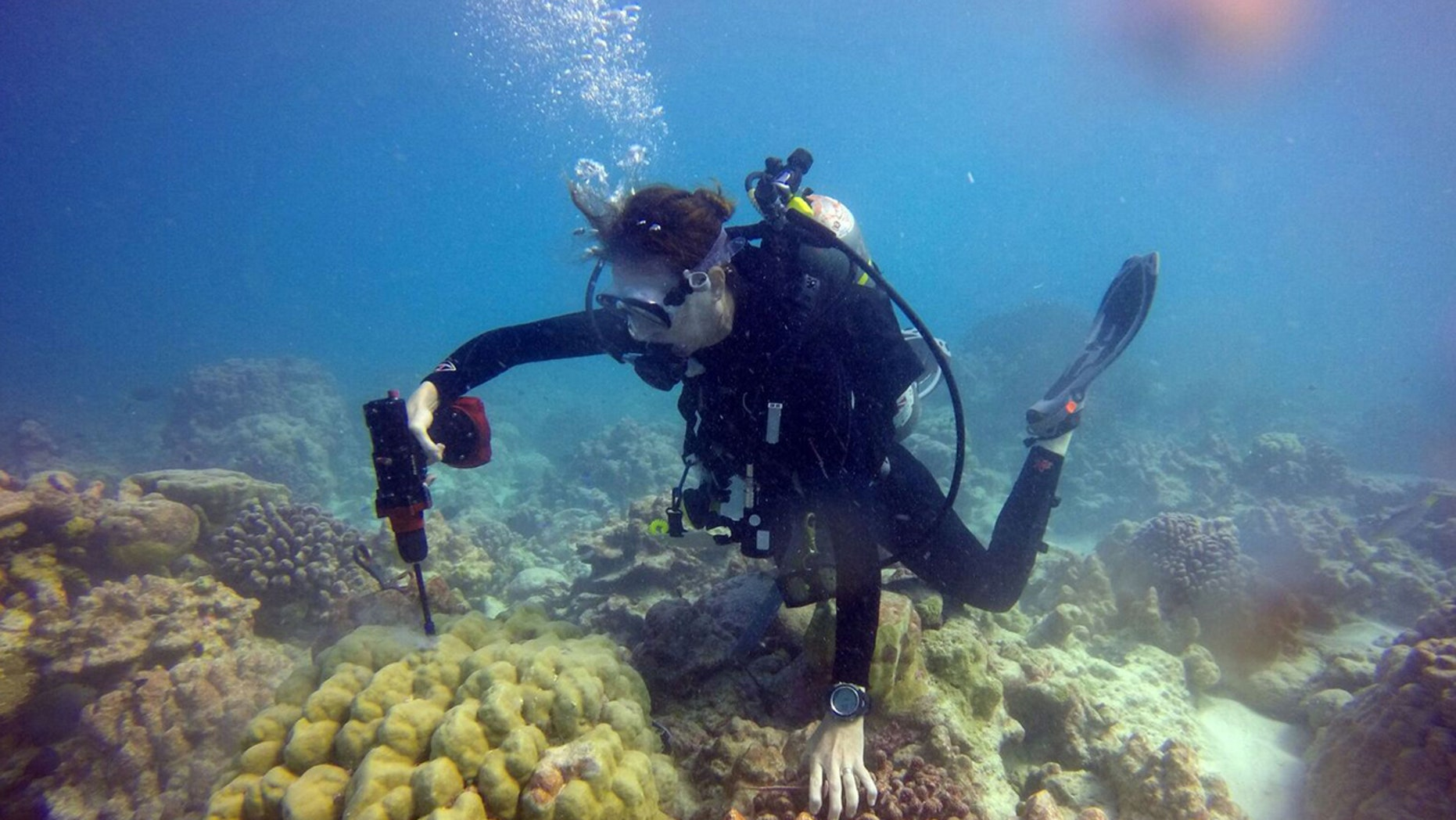 In this photo provided by Kim Cobb, shows Georgia Tech climate scientist Kim Cobb in November at the remote Pacific island of Kiritimati, finding a bit of hope and life amid what in April was a ghost town of dead coral.