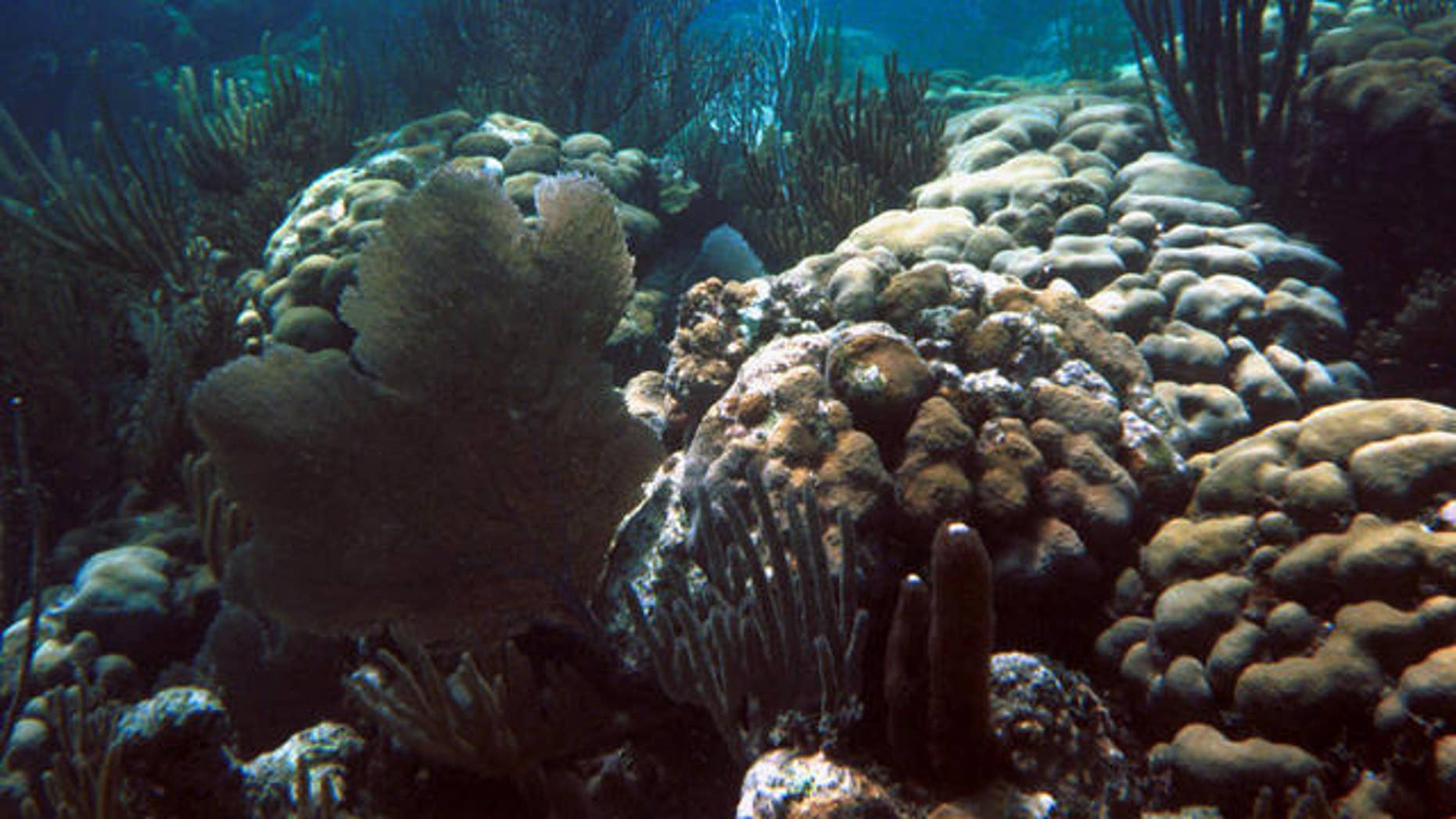 FILE photo from 2001 of diseased coral reef off the island of Culebra, Puerto Rico, photo