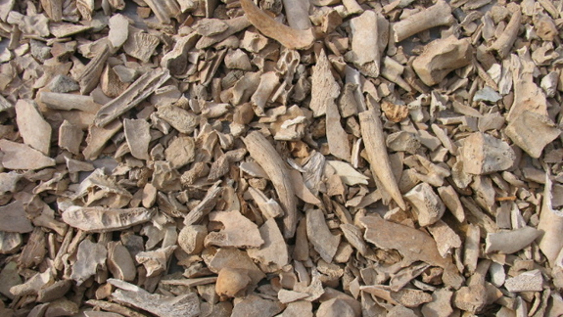 Archaeologists pulled a metric ton of cattle bones from an ancient Corinth theater, perhaps representing yearly feasts in the 4th and 5th centuries A.D.