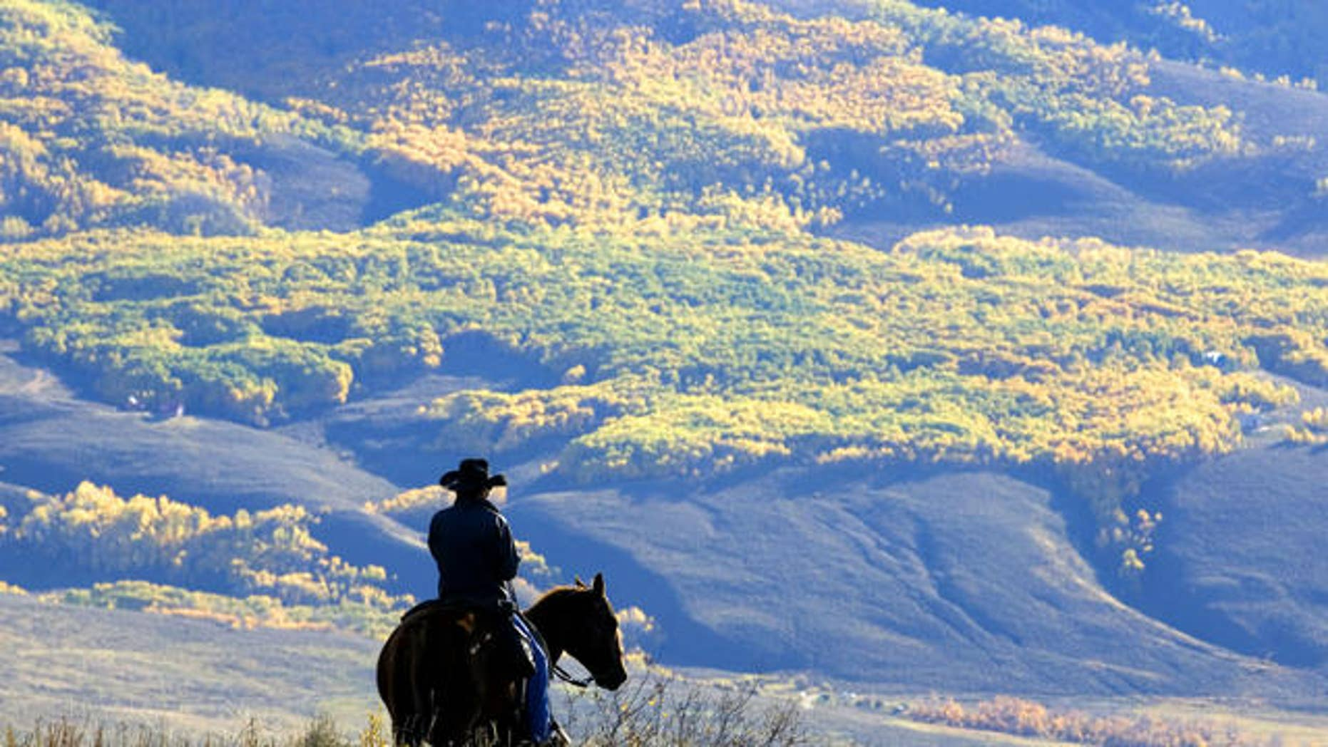 Wrangler Doug Washburn, of Crested Butte, Colo. overlooks aspen trees with their autumn colors, near Jacks Cabin in the Slate River Valley near Crested Butte, Colo. while gathering the Spann cattle from the U.S. National Forest lands, Friday, Oct. 5, 2007.  (AP Photo/Nathan Bilow)