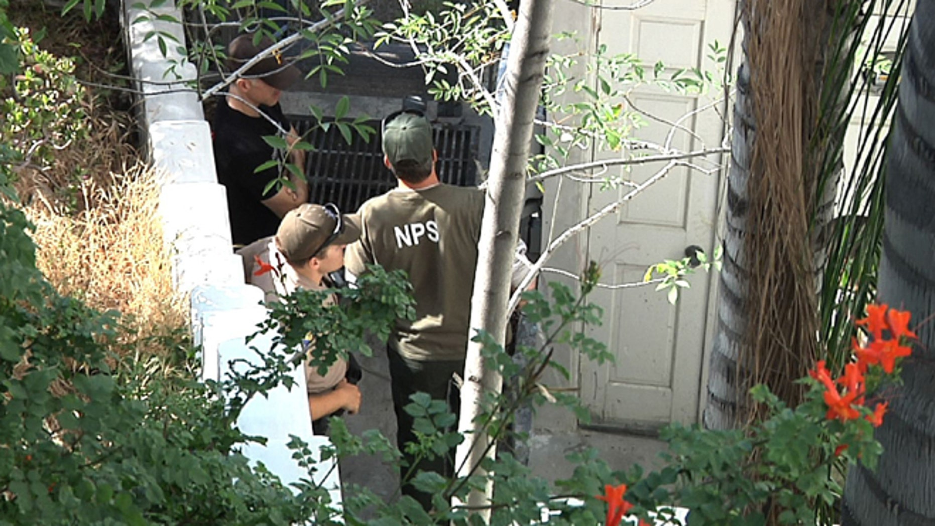 April 14, 2015: This frame from video shows officials from the National Park Service preparing to enter the crawl space of a house looking for a mountain lion in Los Angeles.