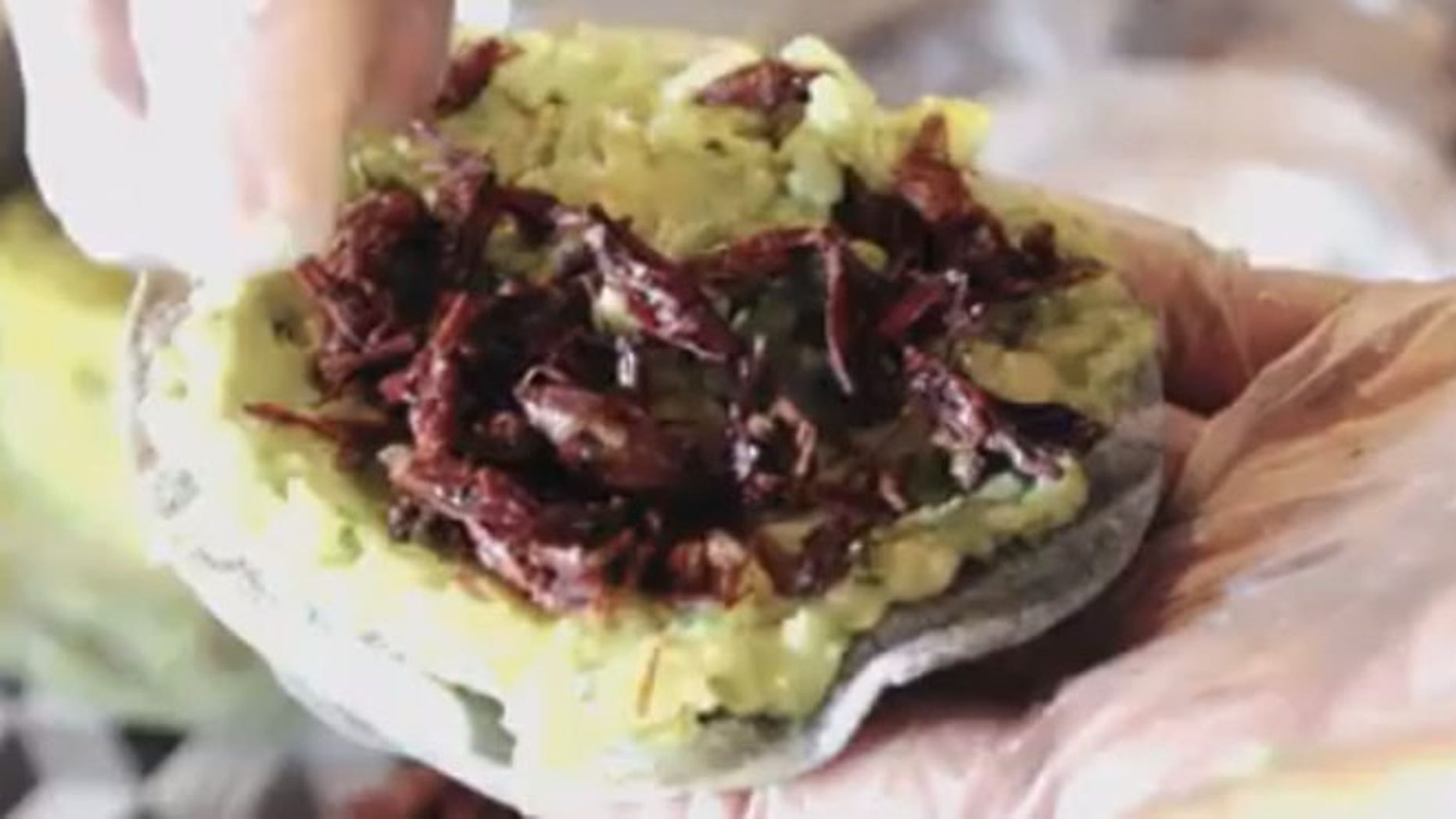 New York's Antojeria la Popular started serving a tacos and burgers made with crickets-that are surprisingly pretty popular.