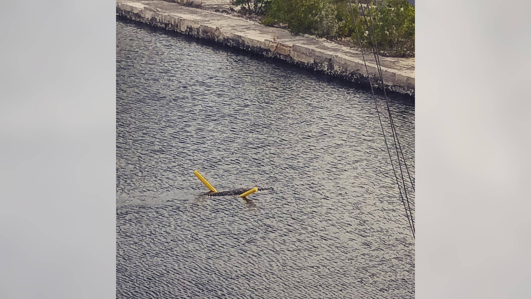 A crocodile floats on a yellow pool noodle across a canal in Key Largo, Florida, on Aug. 6, 2018.
