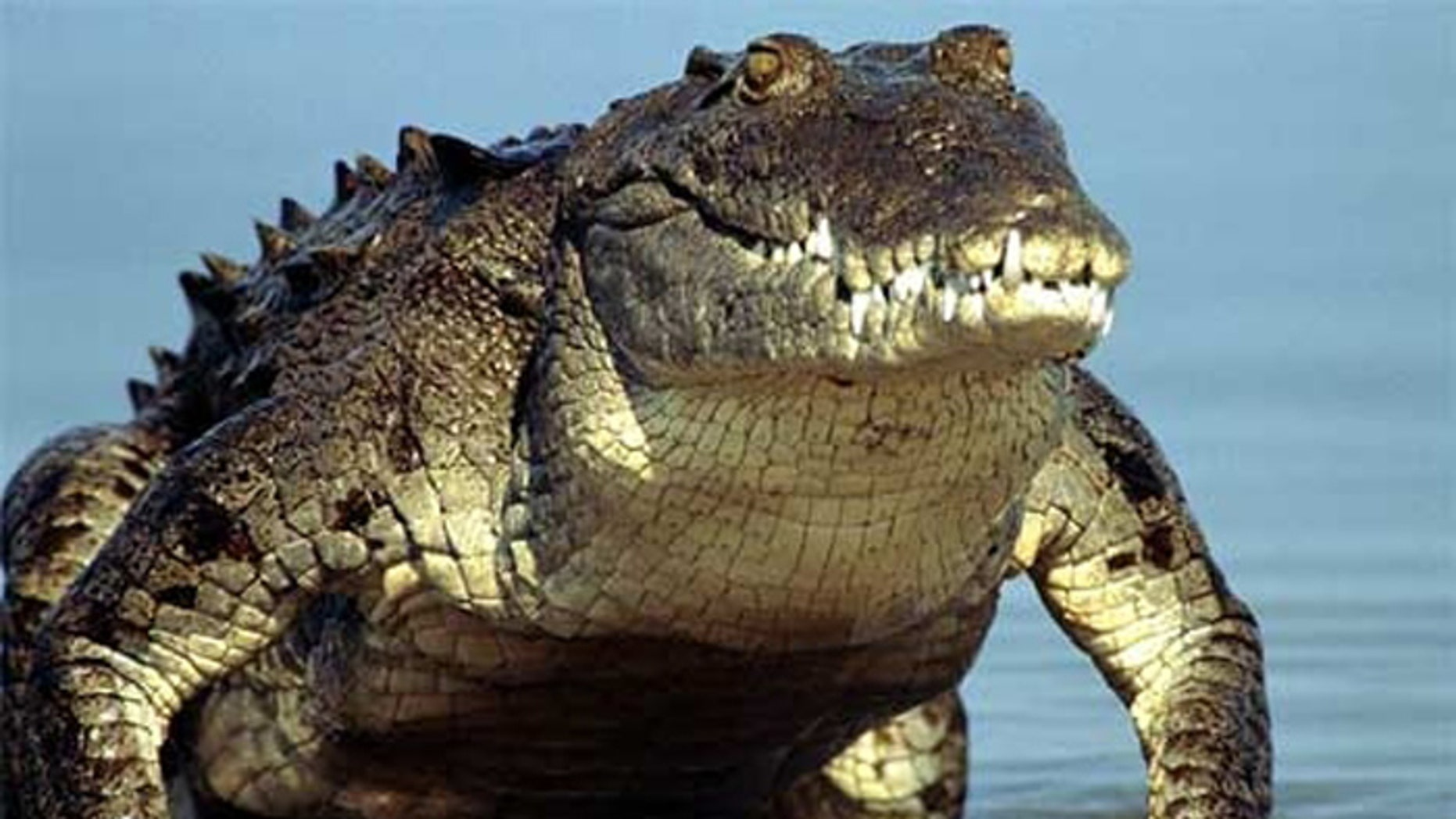 Florida will train you to hunt these critters.
