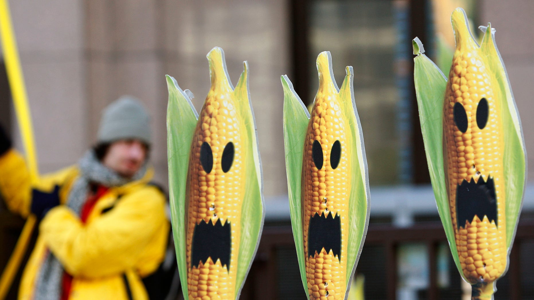 FILE: November 24, 2008: A Greenpeace activist displays signs that symbolize genetically modified maize crops, during a protest in front of the European Union headquarters in Brussels.
