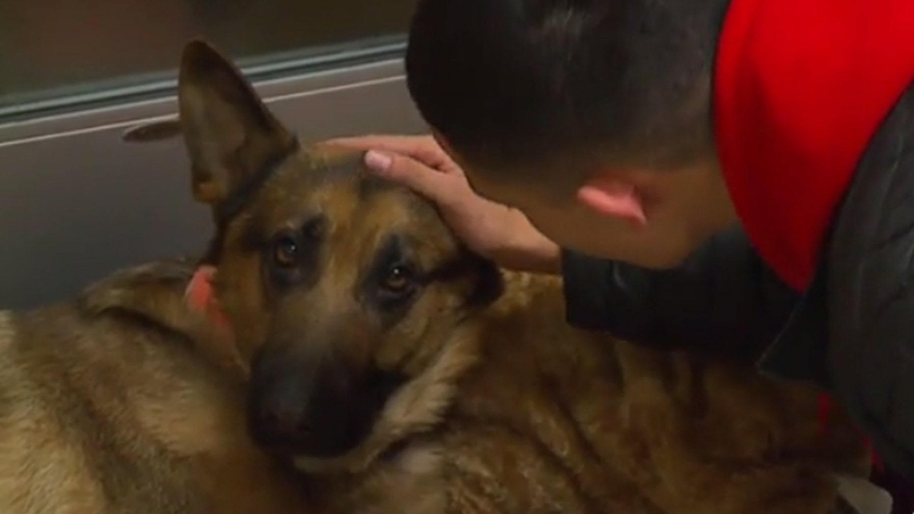 Javier Mercado says his dog, Rex, came to his aid during a home invasion on Wednesday.