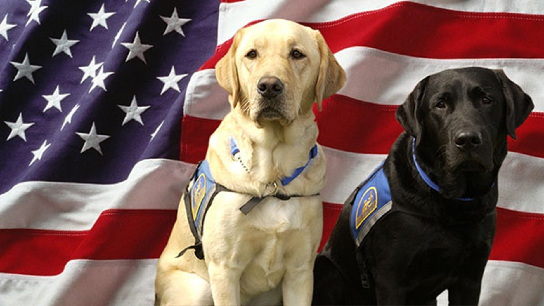 These patriotic pups will be ready for the Fourth. Will yours be, too?