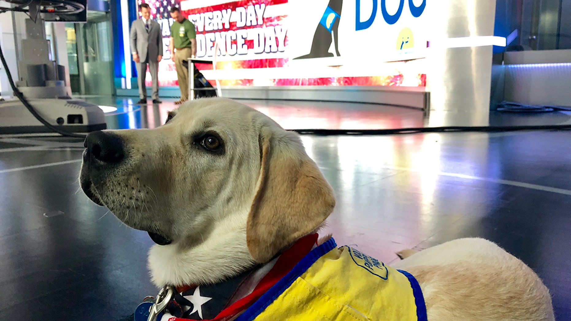 Service dogs trained by Canine Companions for Independence are making a difference in the lives of returning war veterans with PTSD. They are trained in nightmare interruption, turning on lights in a room and other things.