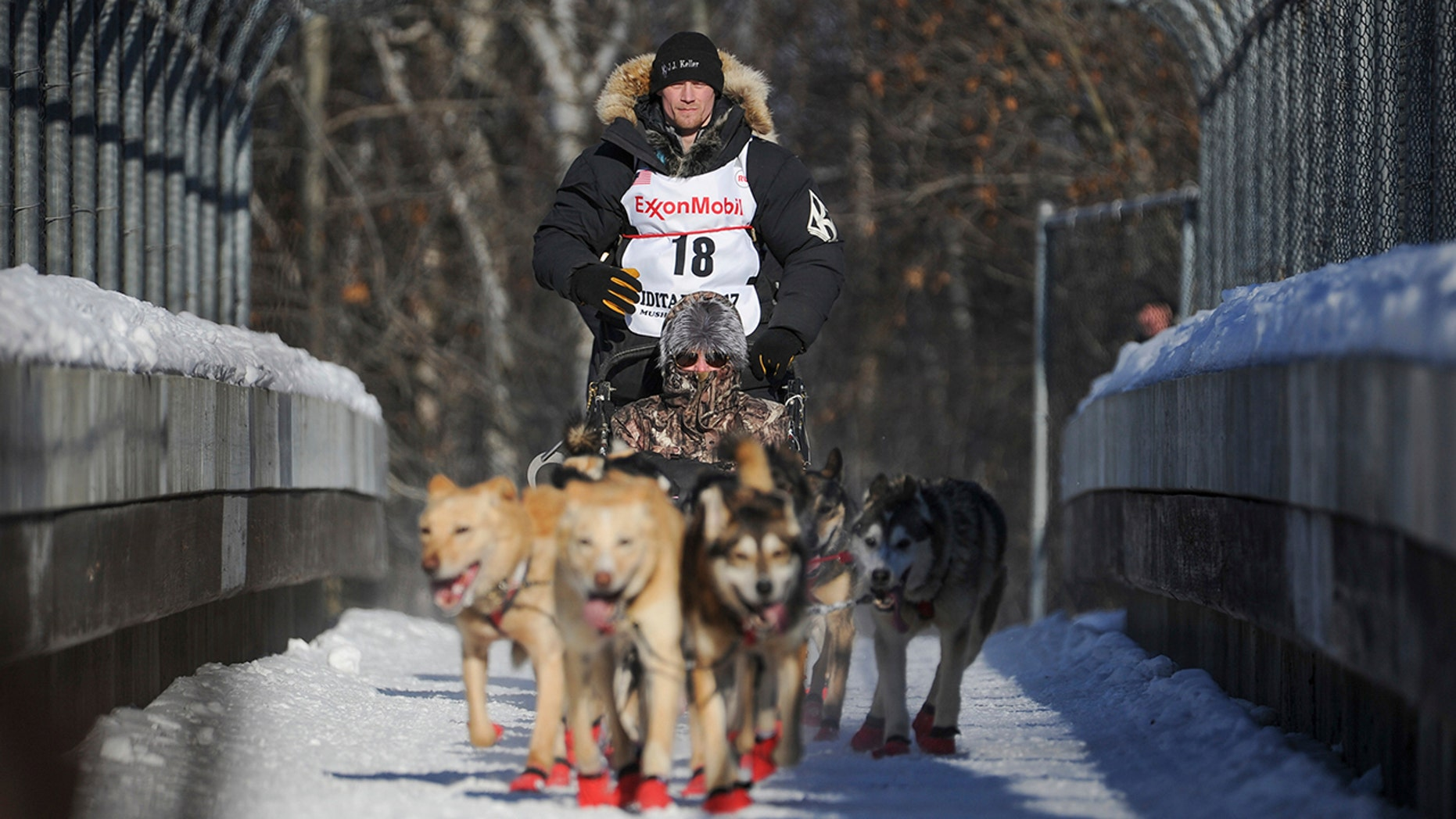In this March 4, 2017, file photo, four-time and defending champion Dallas Seavey mushes during the ceremonial start of the Iditarod Trail Sled Dog Race in Anchorage, Alaska. Seavey denies he administered banned drugs to his dogs in this year's race, and has withdrawn from the 2018 race in protest. The Iditarod Trail Committee on Monday, Oct. 23, 2017, identified Seavey as the musher who had four dogs test positive for a banned opioid pain reliever after finishing the race last March in Nome.