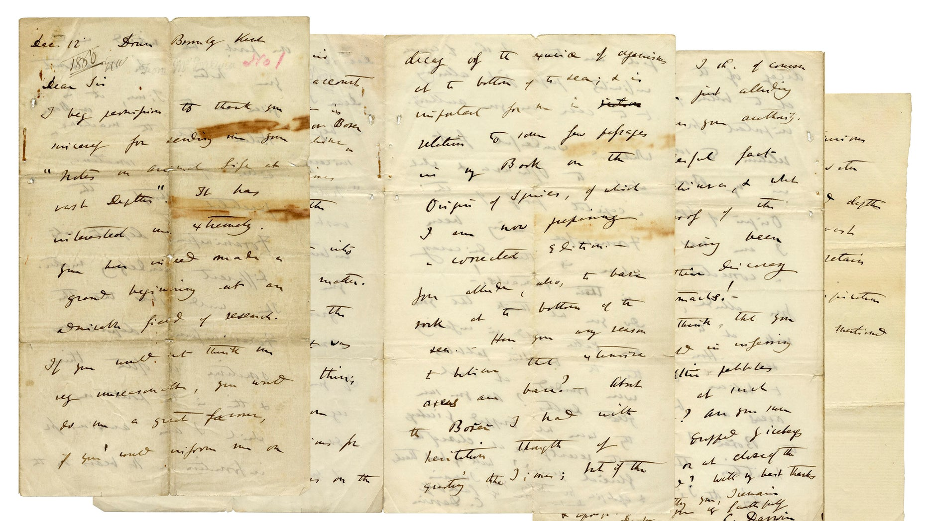 The Darwin letter set to be auctioned off Thursday. (Nate D. Sanders Auctions)