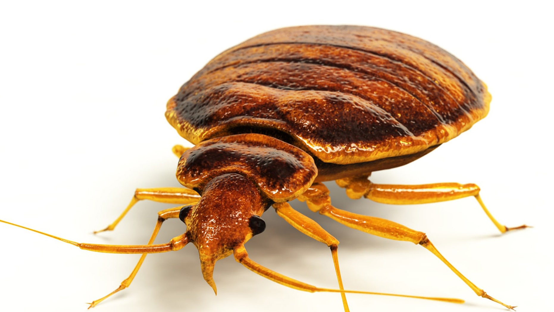 The United Kingdom is dealing with a bed bug outbreak.