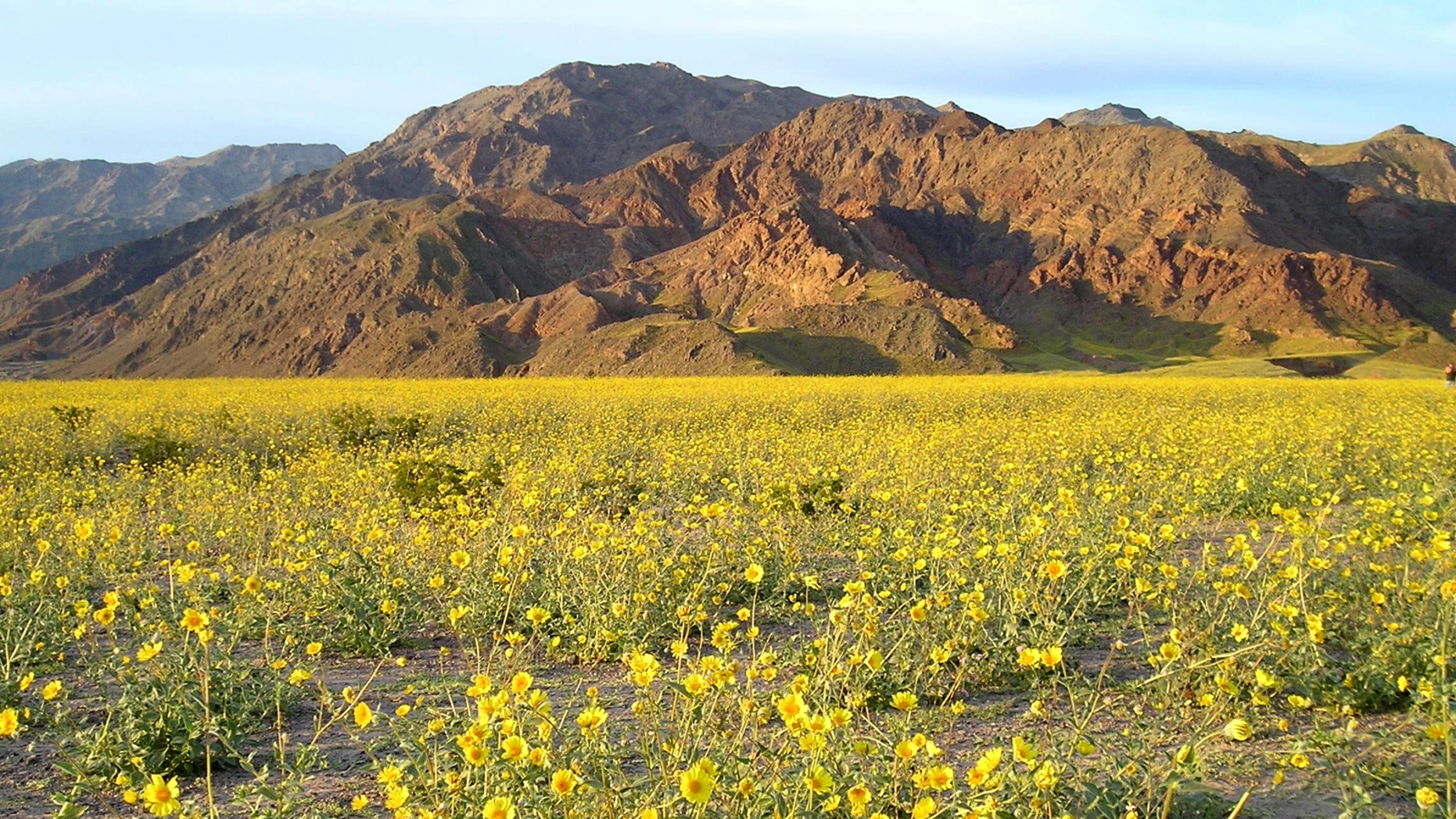 File photo - Abundant winter rains caused a spectacular Death Valley wildflower display in the spring of 2005 (National Park Service).