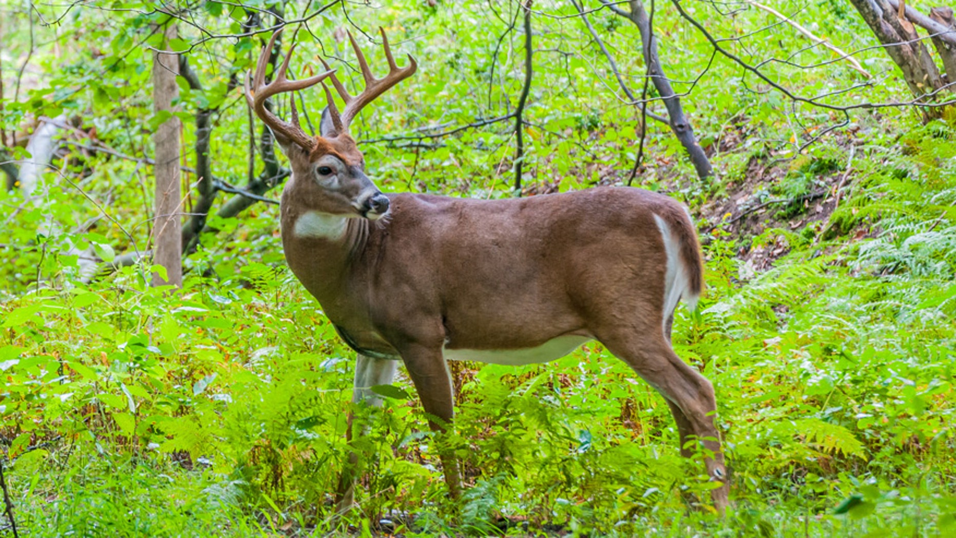 Planning on going deer-hunting this fall? You should start preparing now.