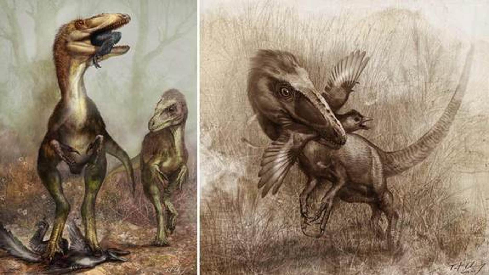 Gut contents of the dinosaur Sinocalliopteryx gigas suggest the predator chowed on cat-size feathered dinosaurs called Sinornithosaurus (illustrated in left panel), as well as crow-size birds known as Confuciusornis (right).