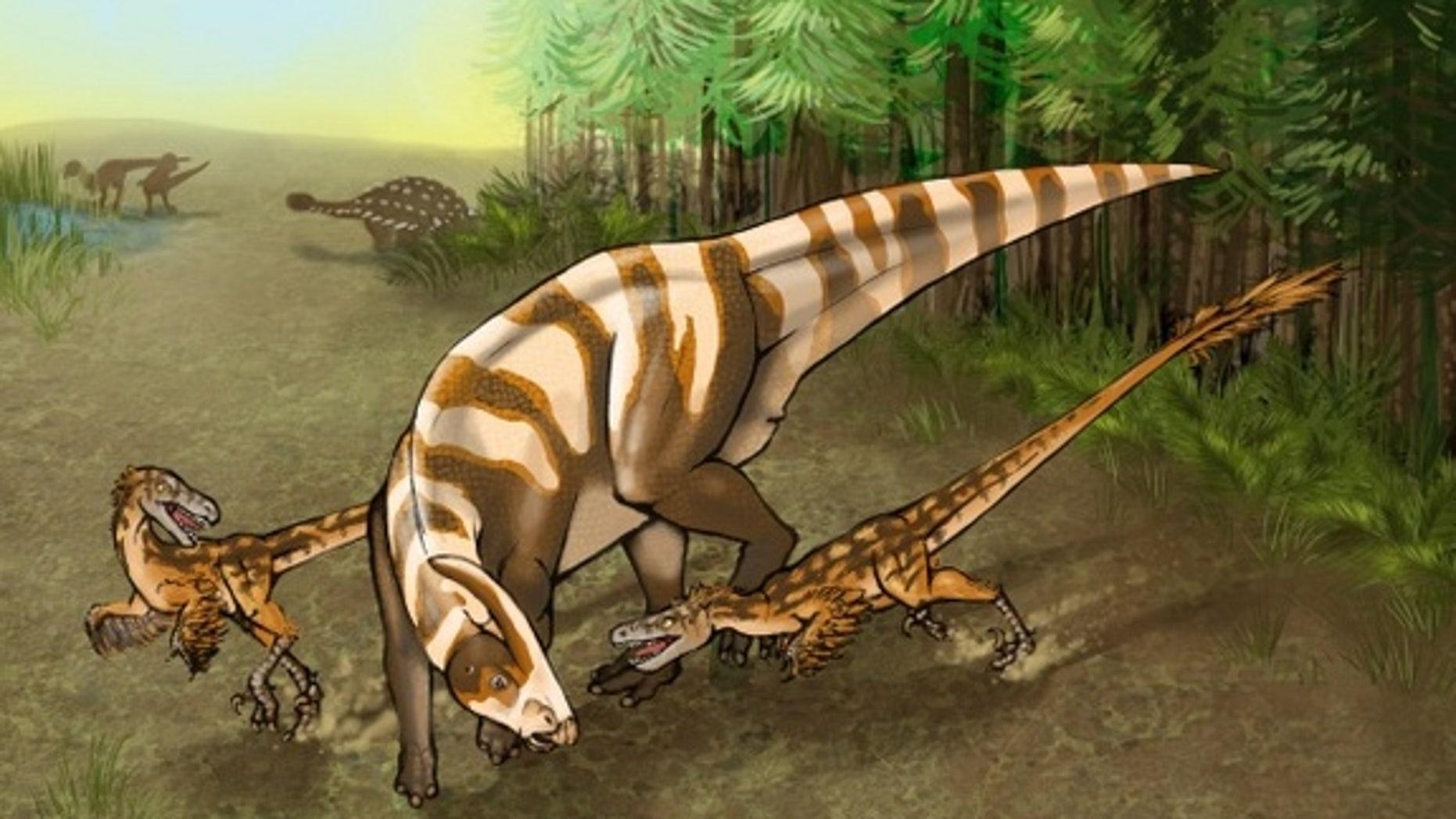 <em>Saurornitholestes sullivani</em> attacks a subadult hadrosaur in this illustration.