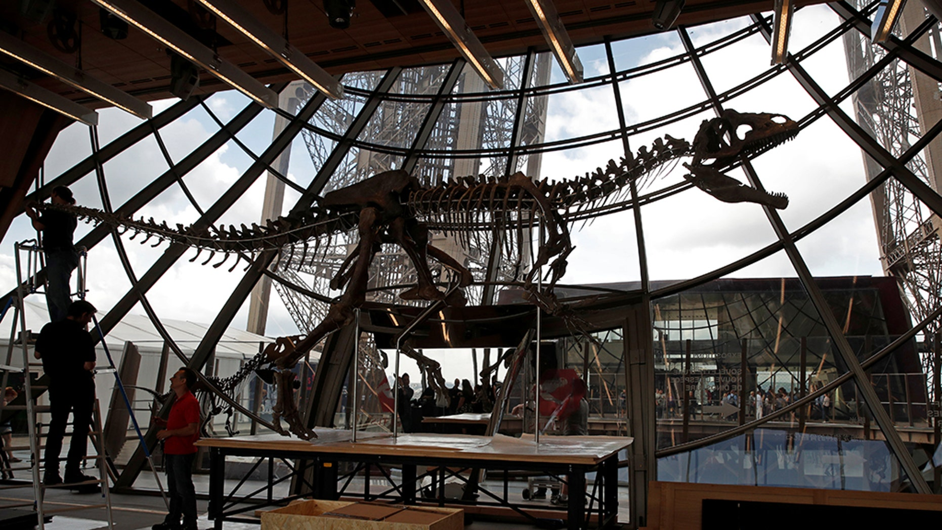 Workers reconstruct dinosaur fossil at the Eiffel tower, in Paris, France, June 2, 2018 ahead of its auction on Monday. (REUTERS/Philippe Wojazer)
