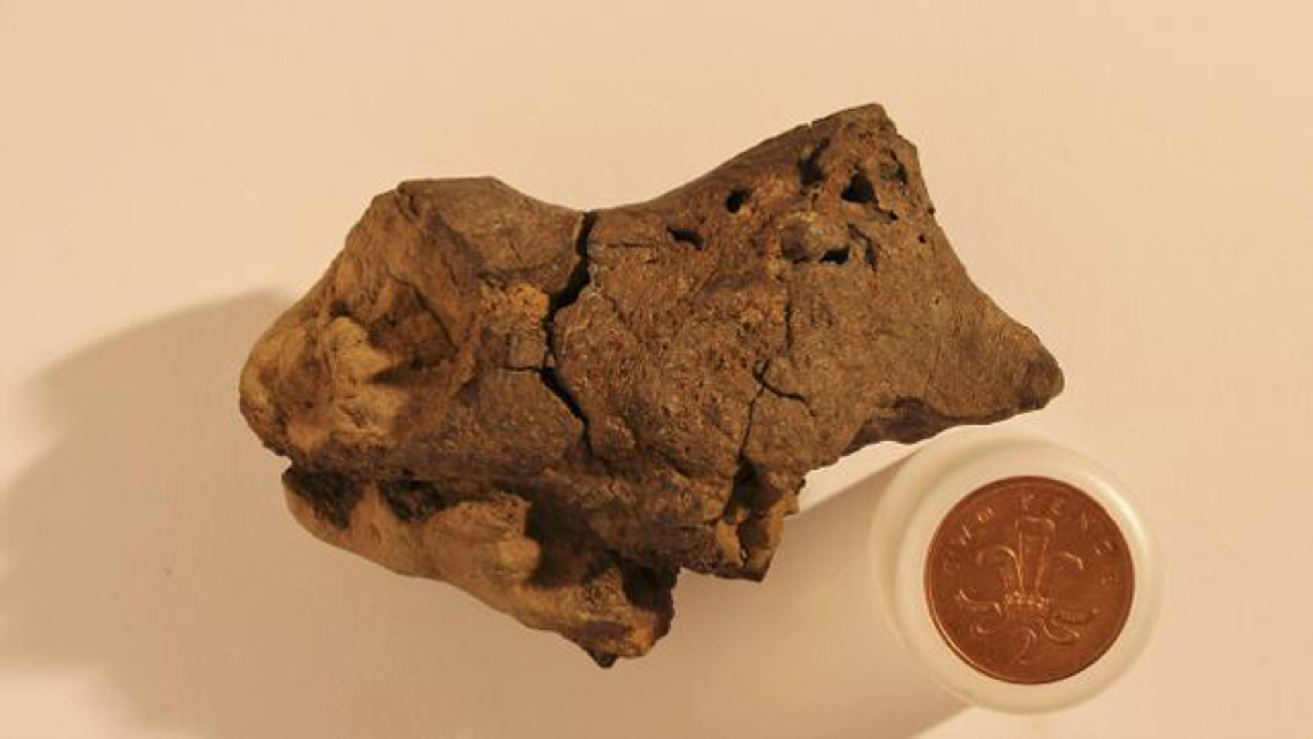 This undated image shows the first known example of fossilized brain tissue from a dinosaur, placed next to a one-pence coin for scale