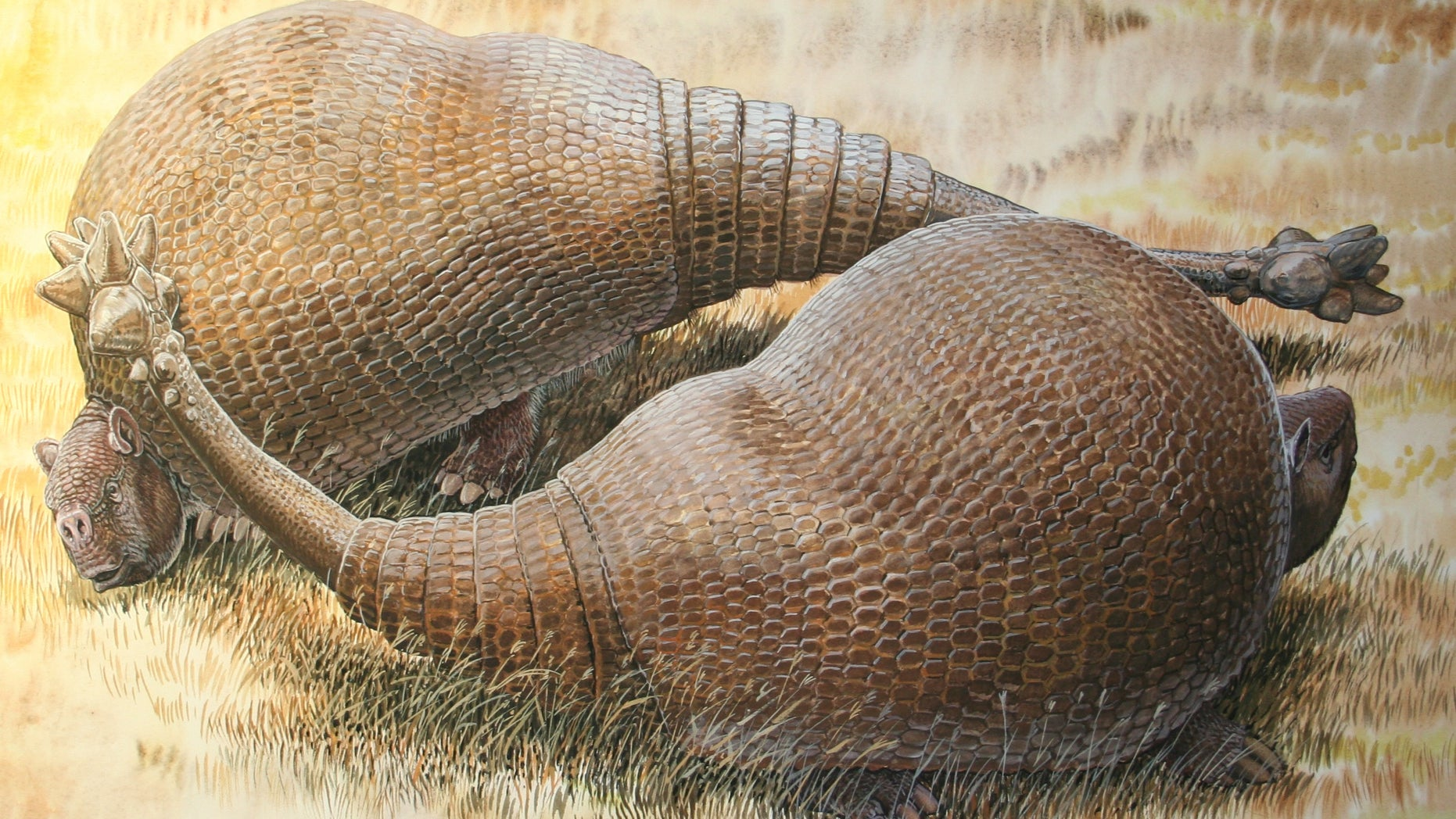 Two male glyptodonts (Doedicurus clavicaudatus) facing off: The massive, club-shaped tails were probably used more for intraspecific combat than defense against predators.  (Peter Schouten)