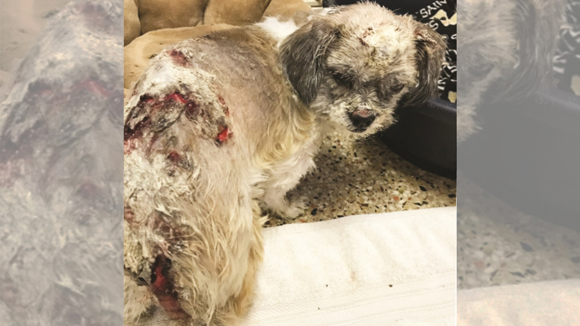 PETA is offering a $5,000 reward to anyone with information about whomever poured chemicals on a 2-year-old dog.