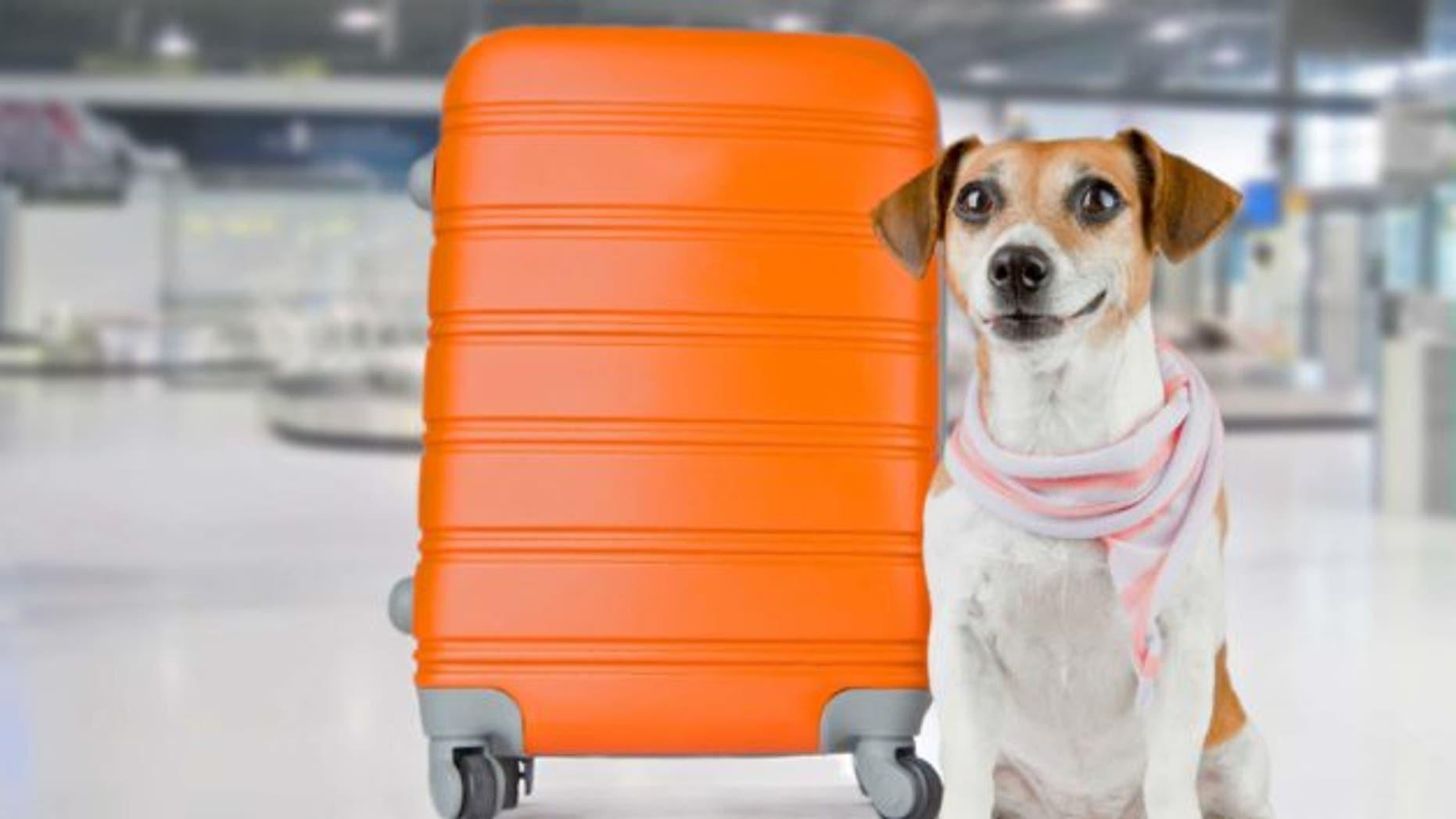 dog-abroad